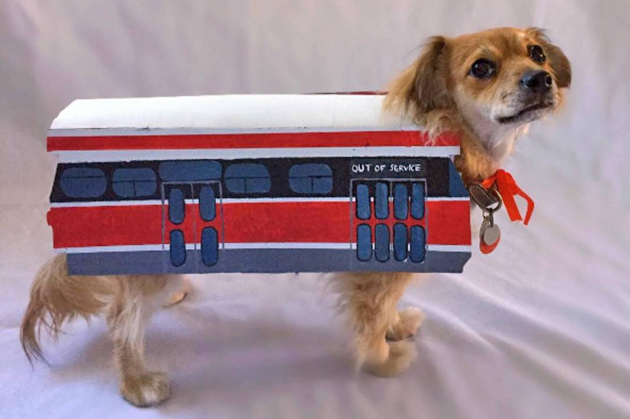 ttc streetcar dog