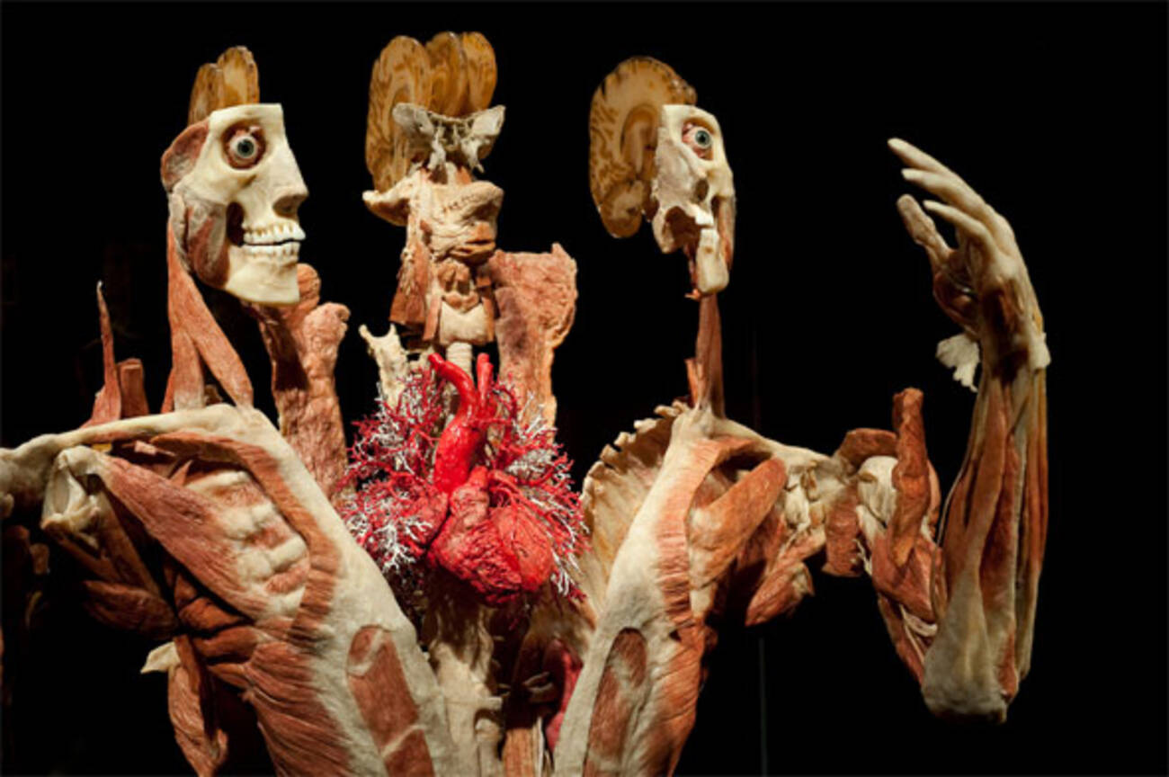 Body Worlds Returns To Toronto This Time With More Heart