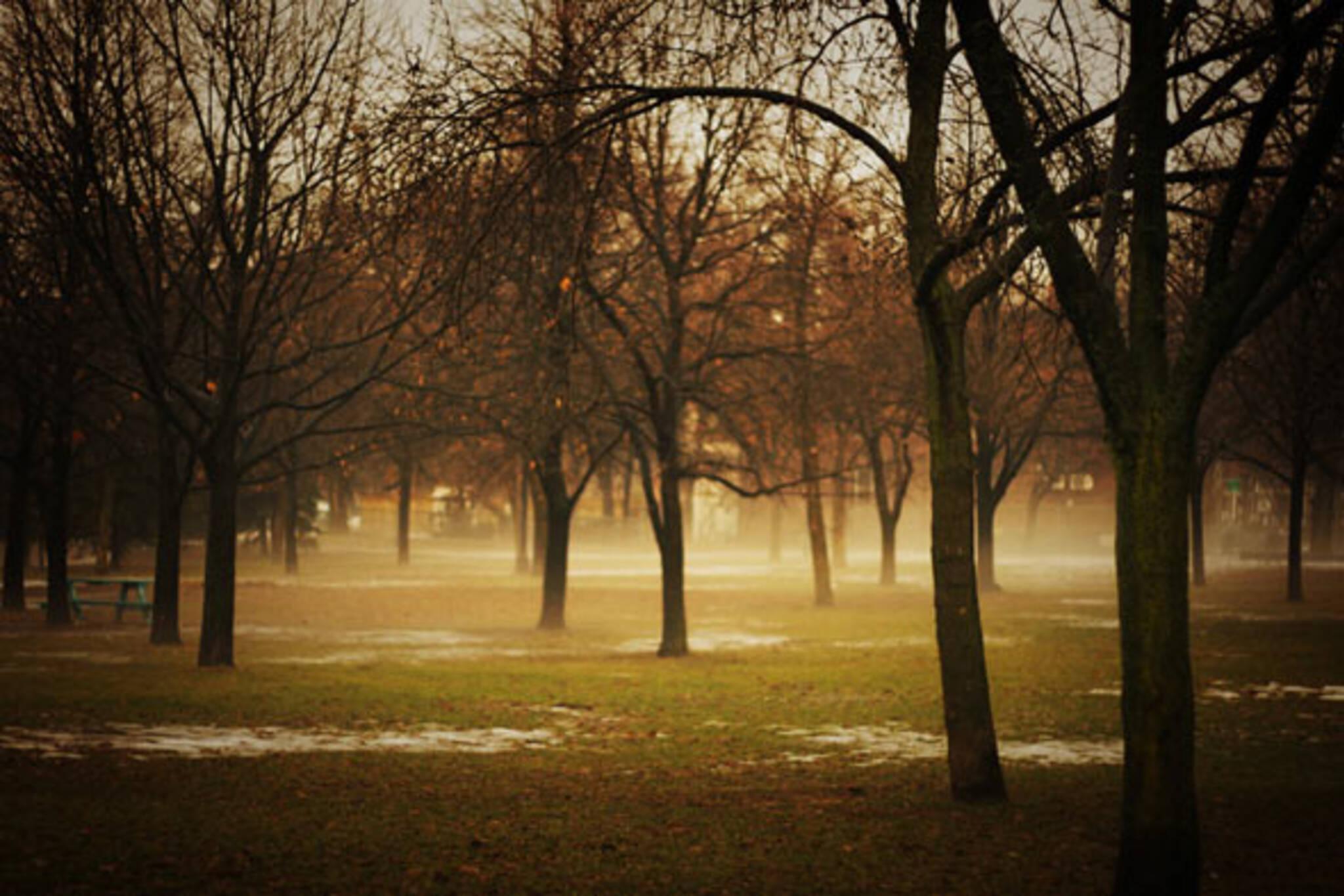 trees settle