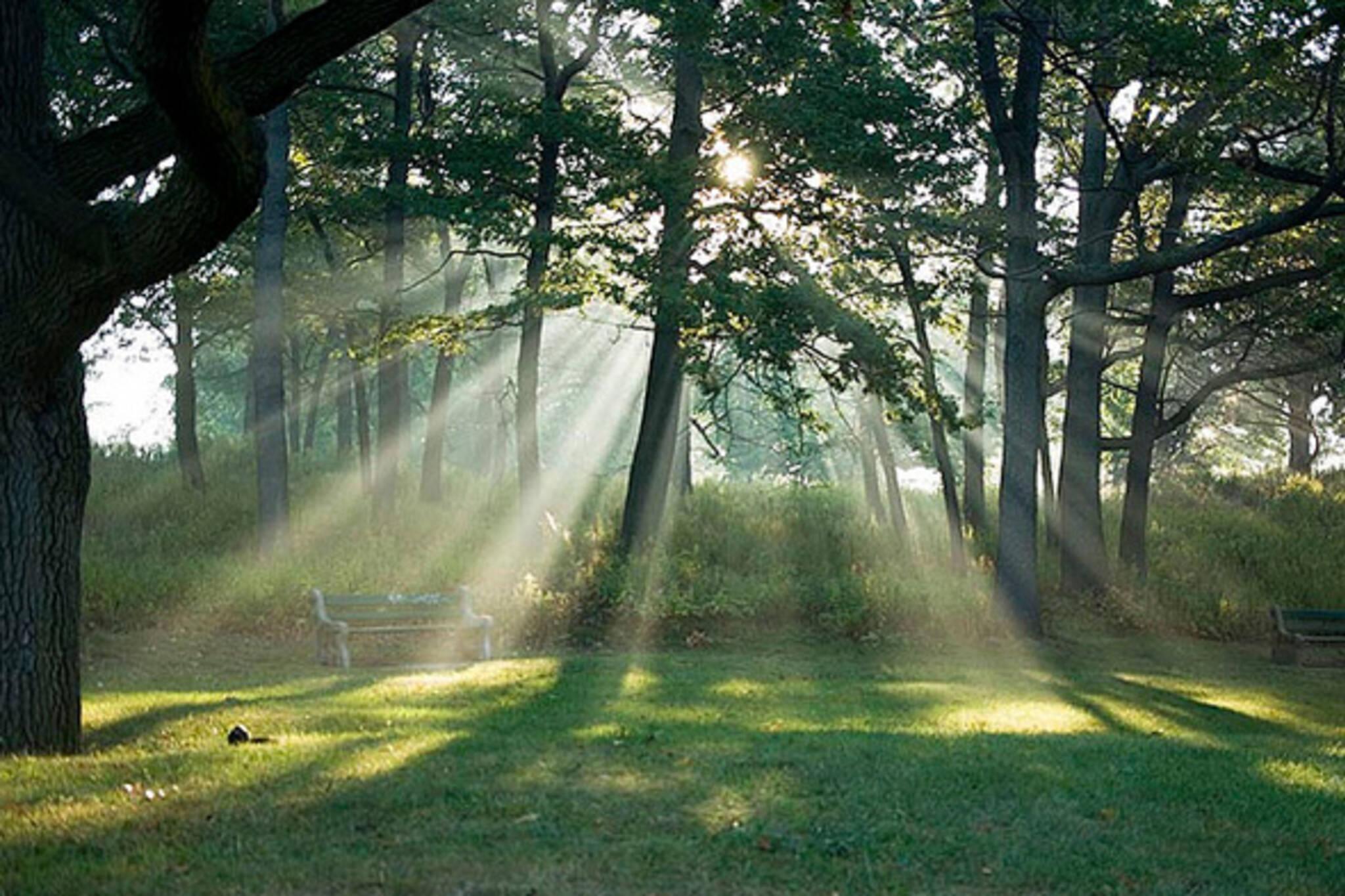 Toronto Parks Environment Core Services