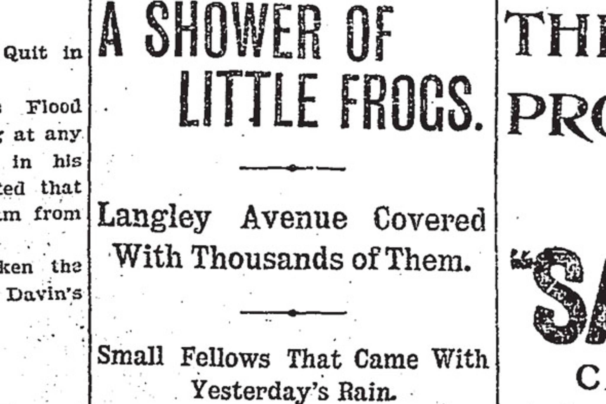 toronto raining frogs