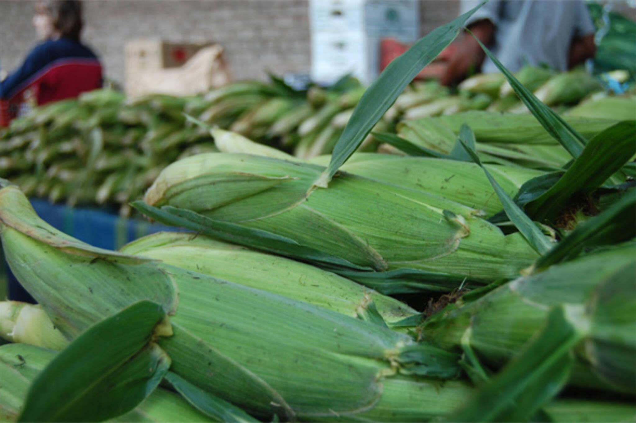 ontario corn season recipes