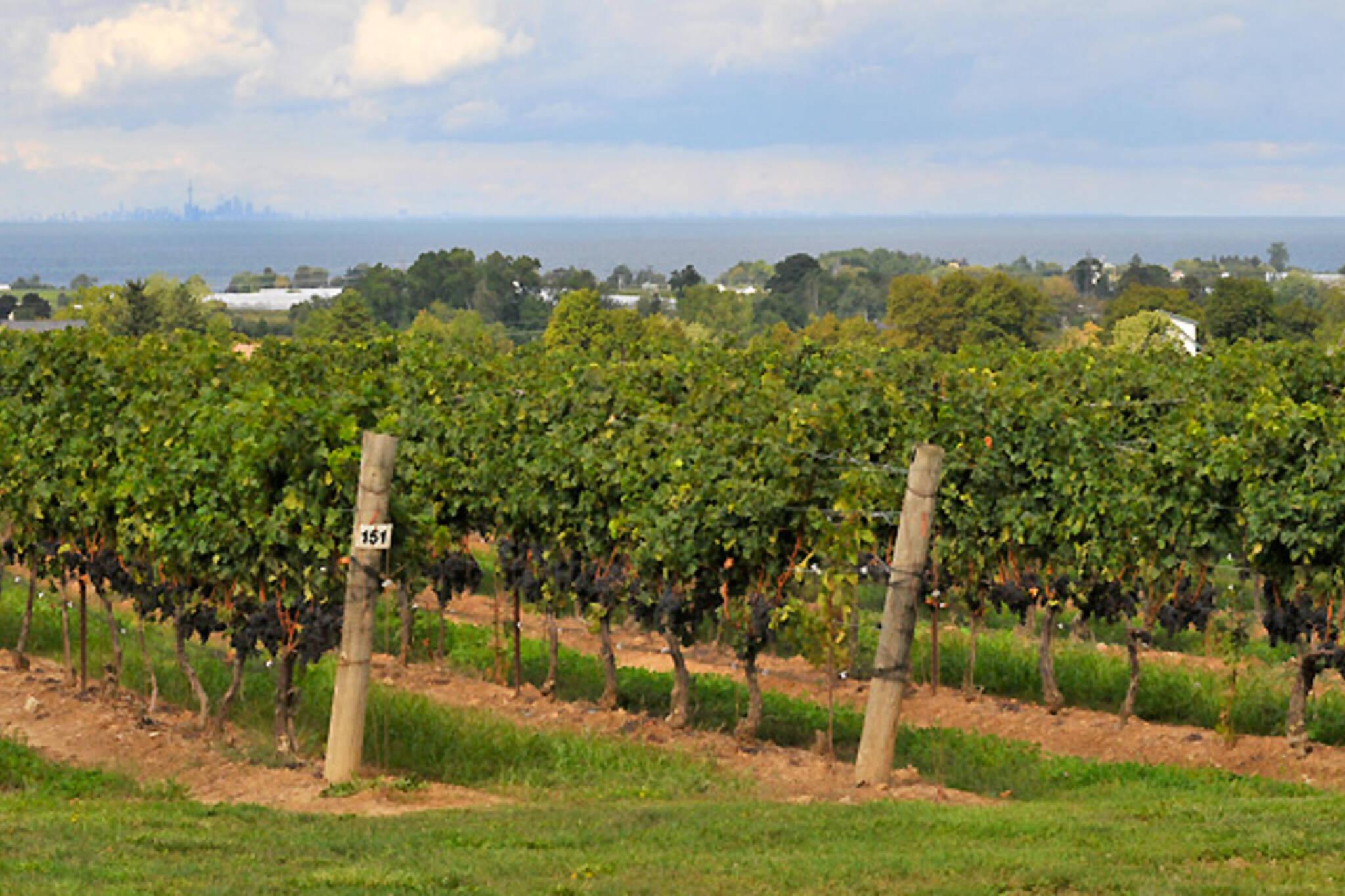 Beamsville Wineries Ontario