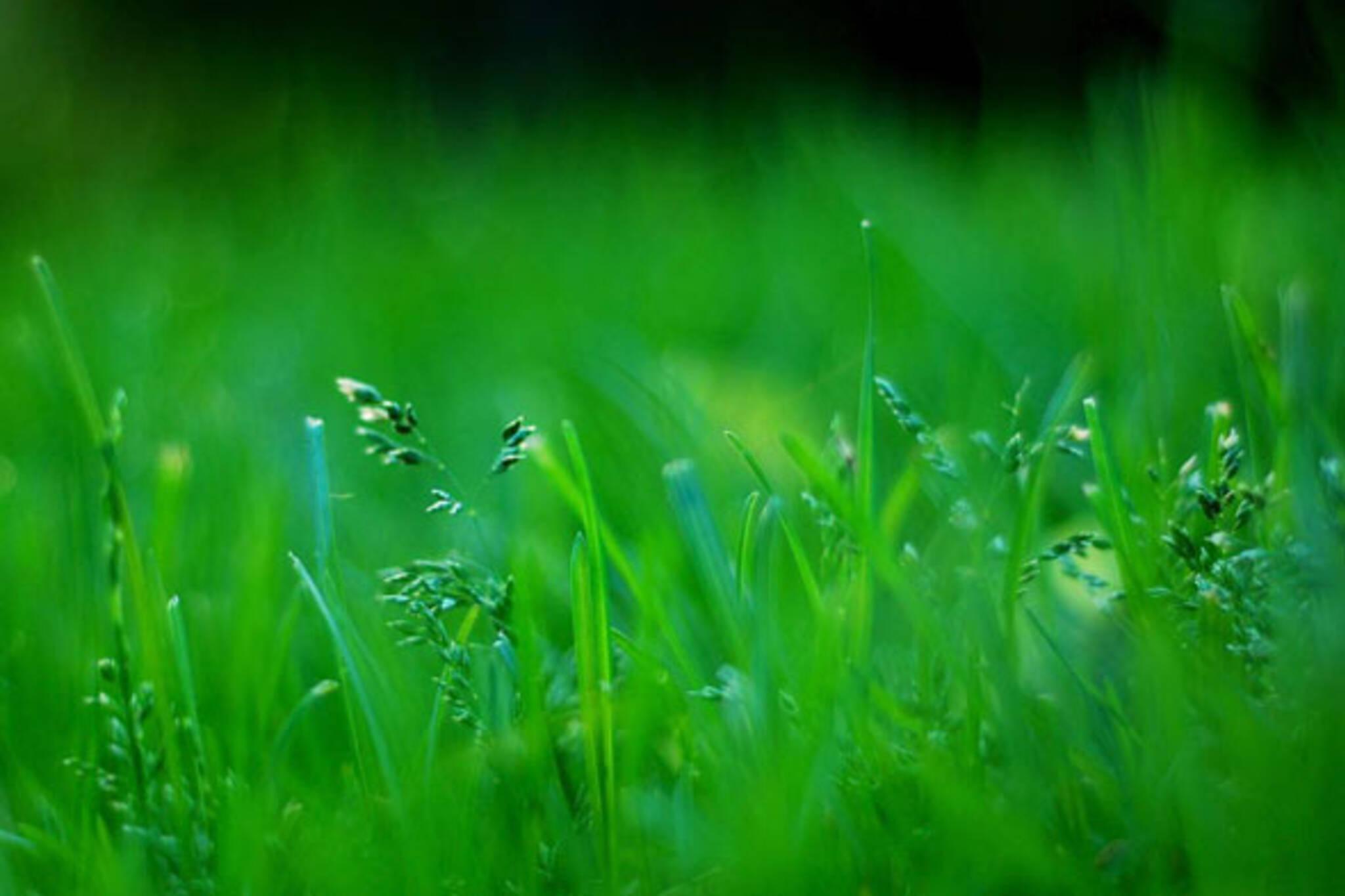grass toronto