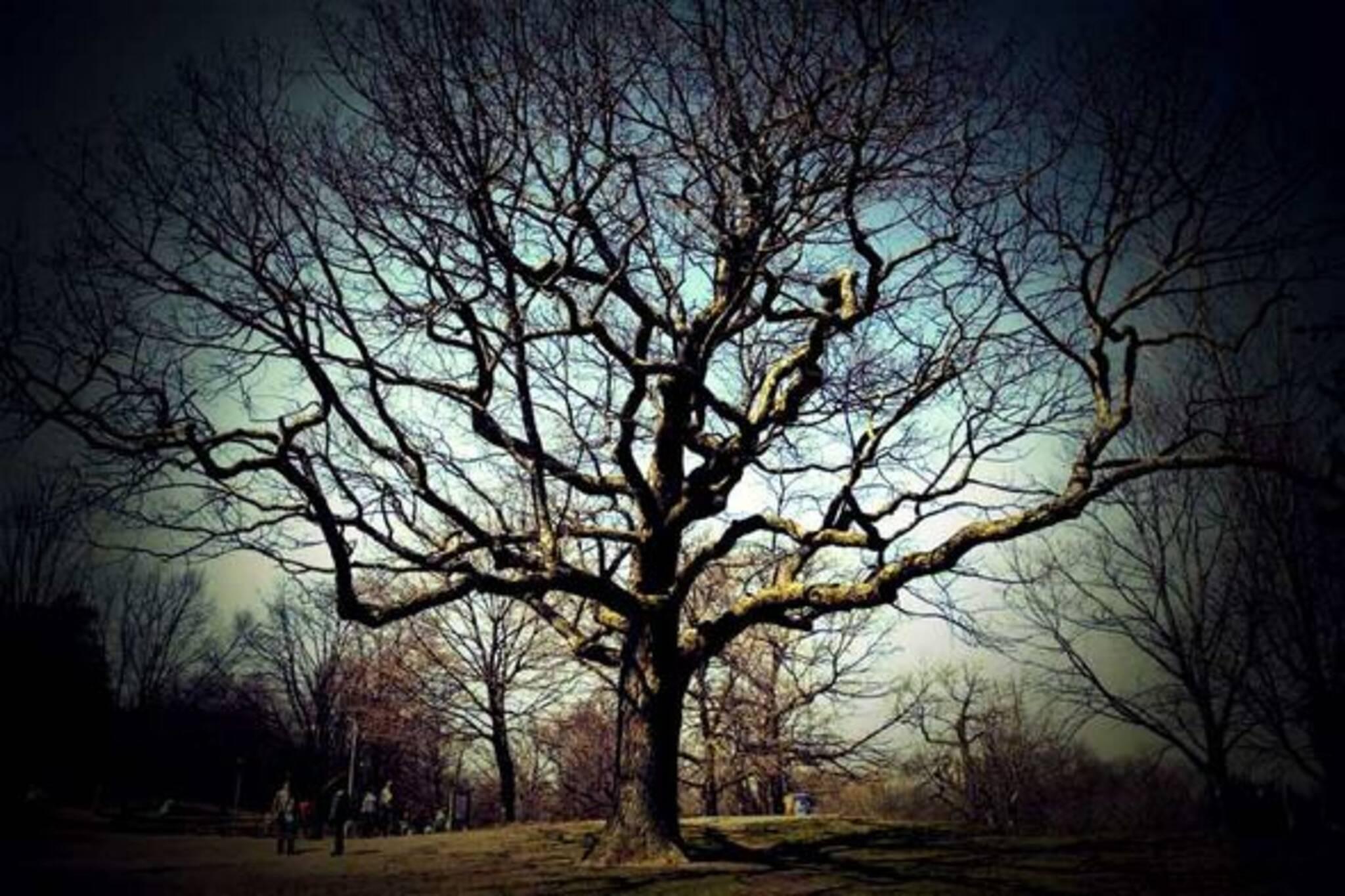 20070707_tree.jpg