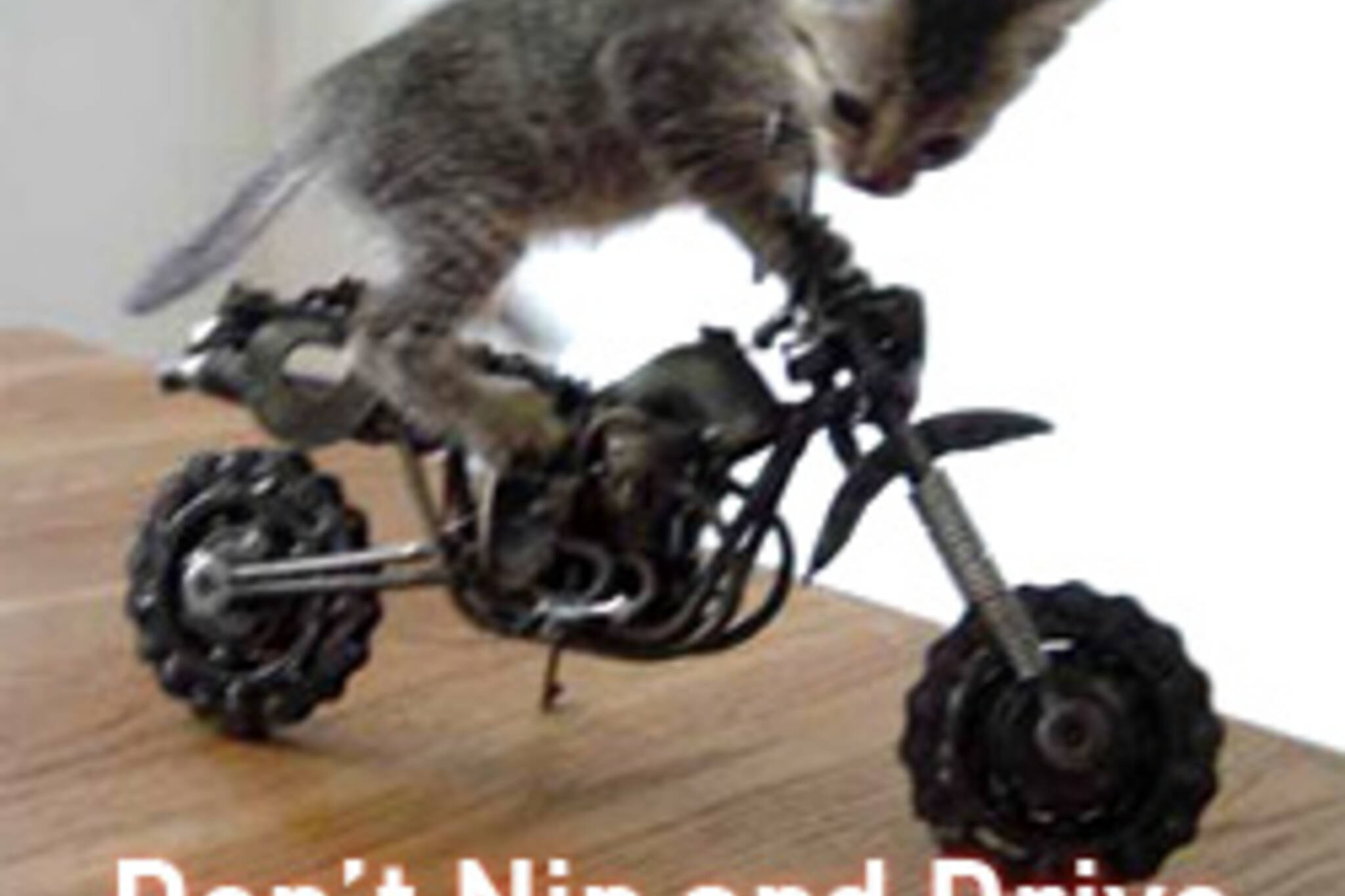 20070608_catnip.jpg