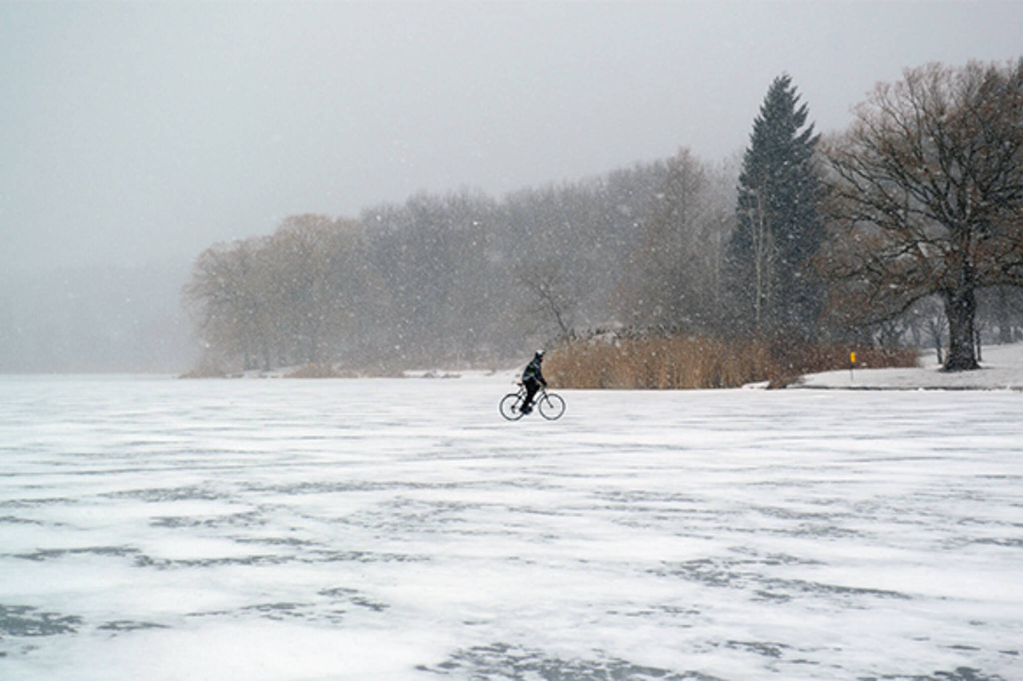 pond cyclist winter