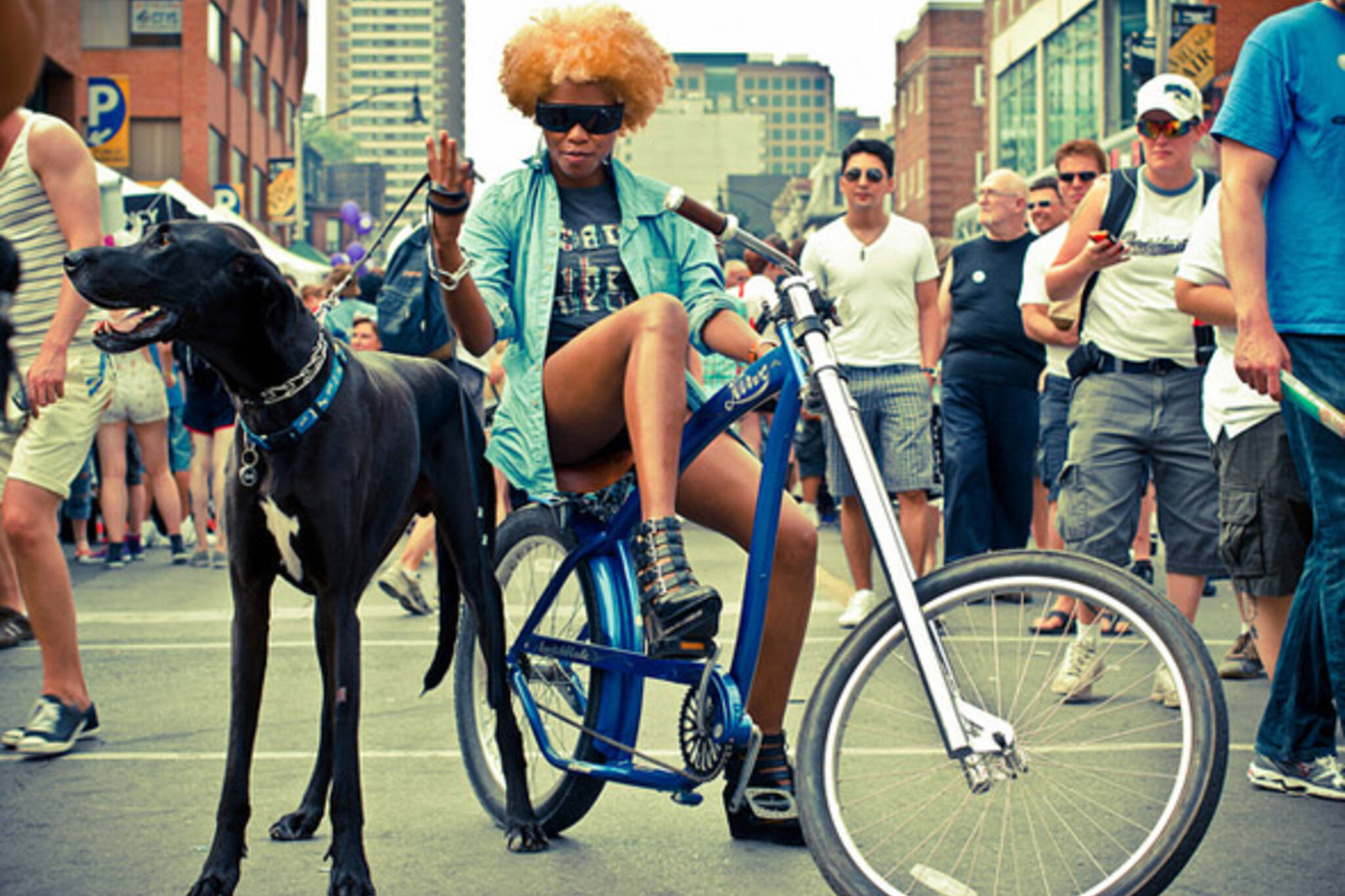dog, street, scene