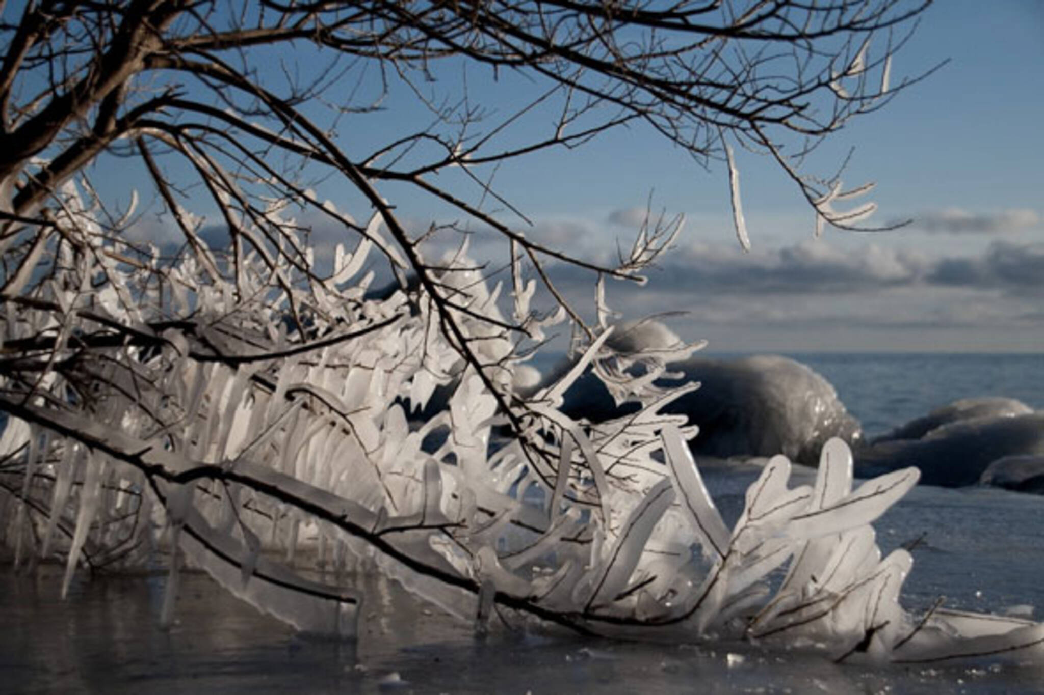 Branch Ice