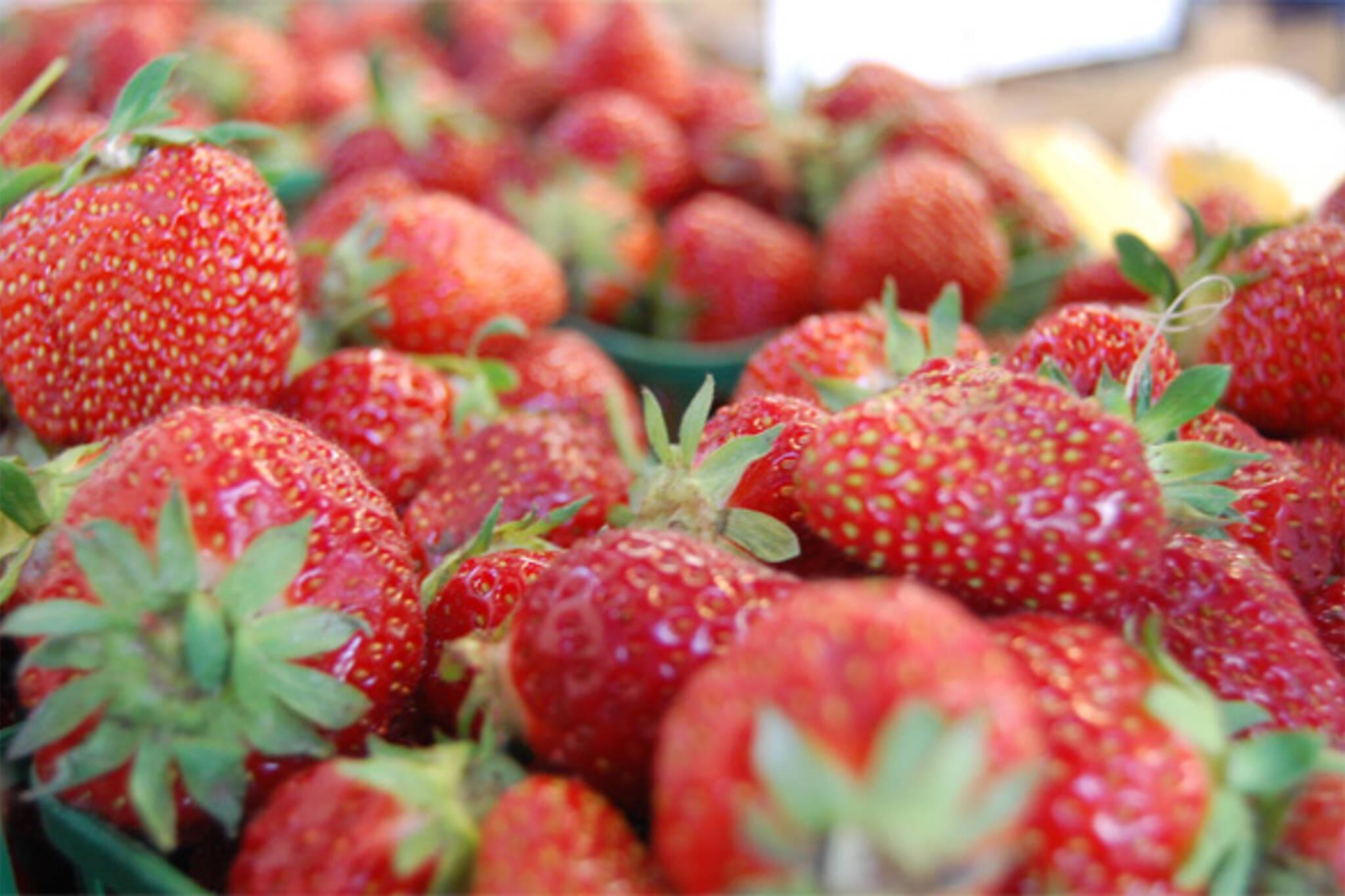 fresh strawberries toronto