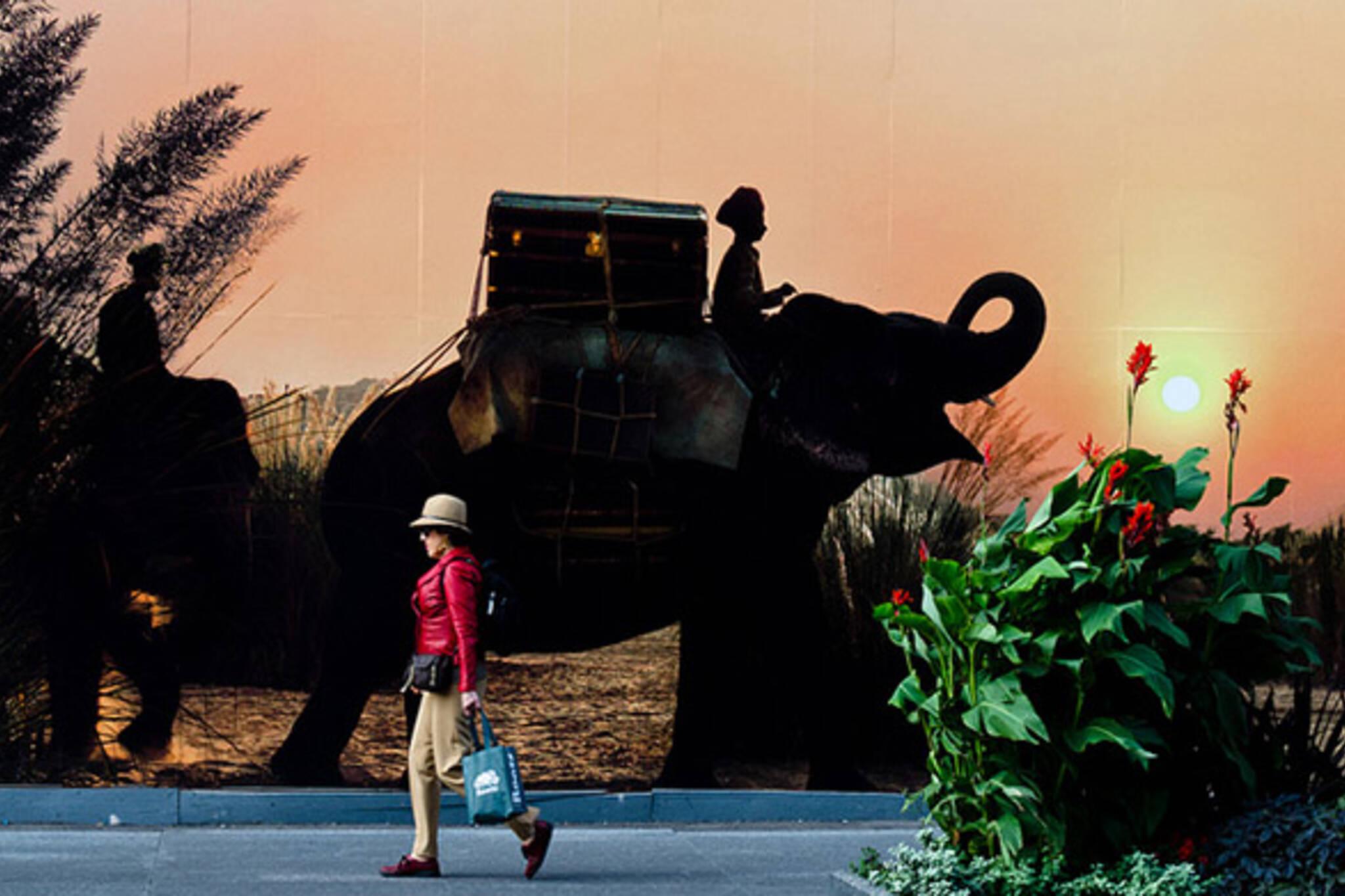 toronto, street, elephant