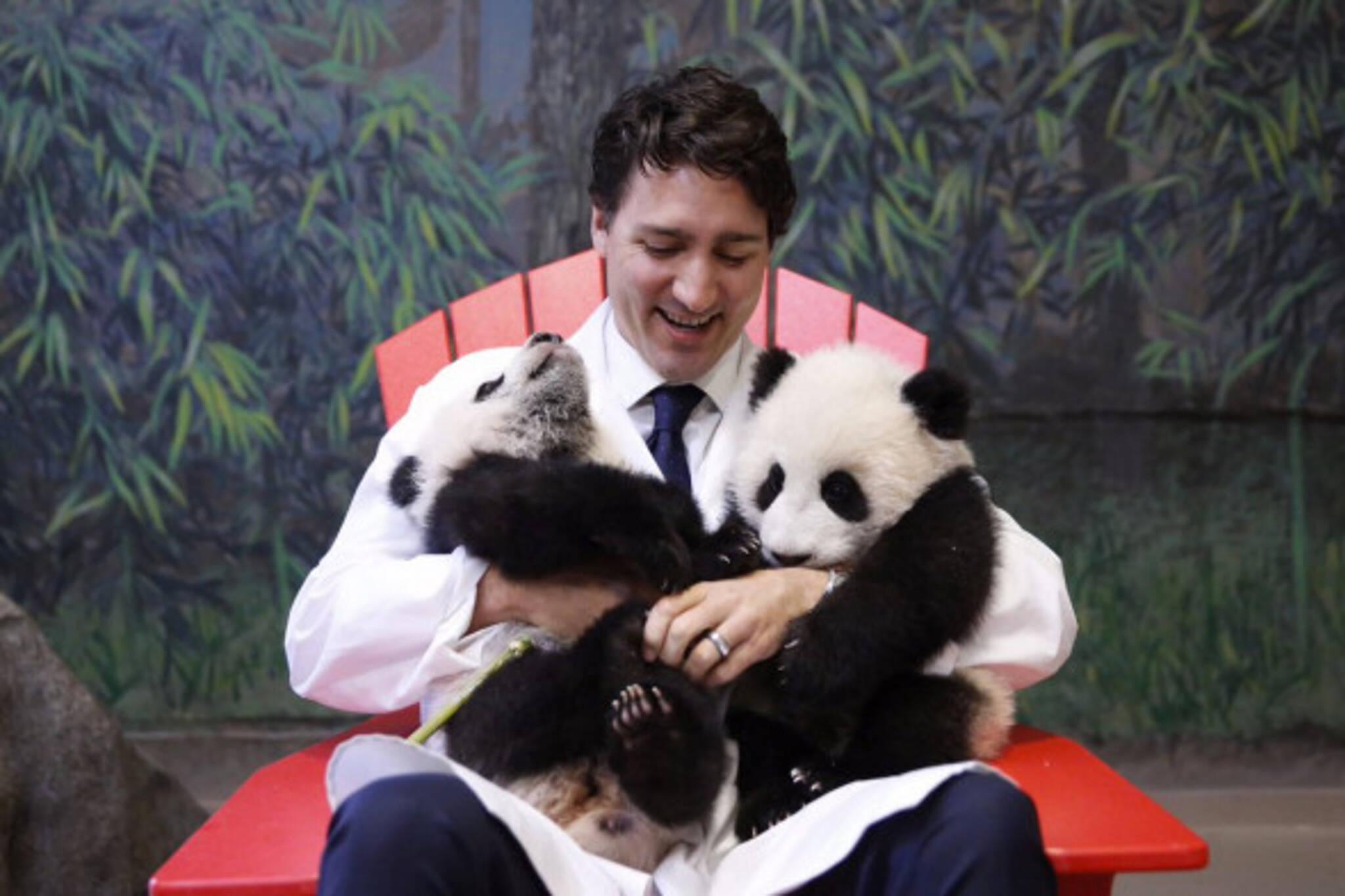 Justin Trudeau Panda