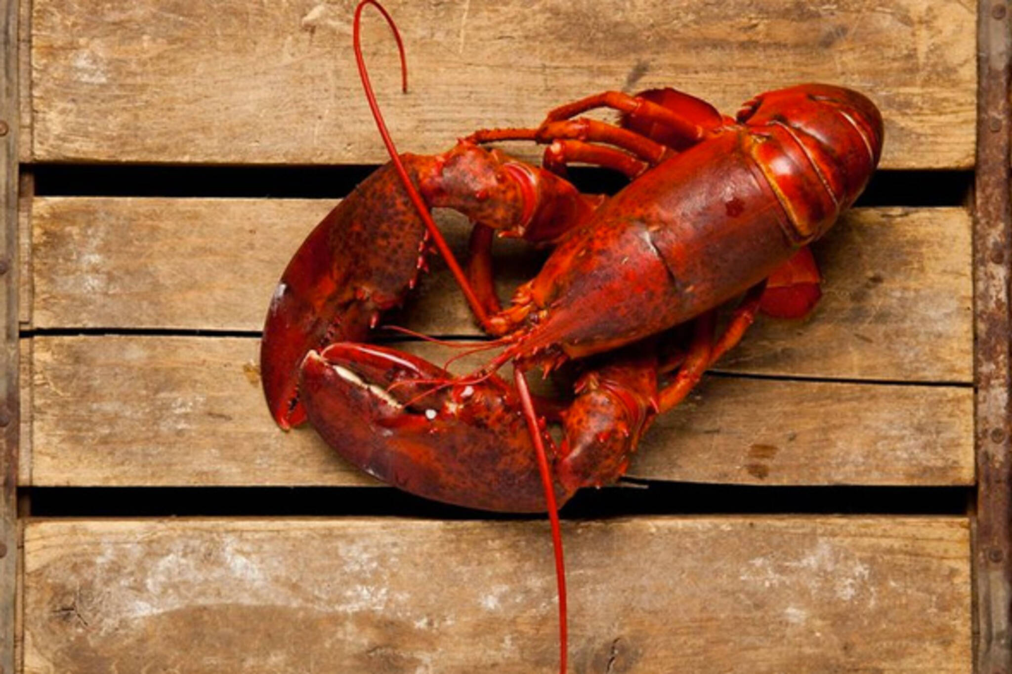 Lobster Fest Toronto