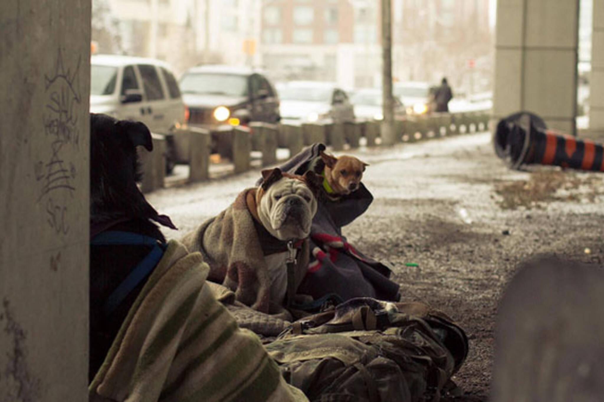 toronto dogs