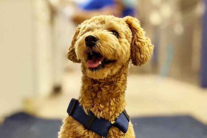 Cabbagetown Pet Clinic
