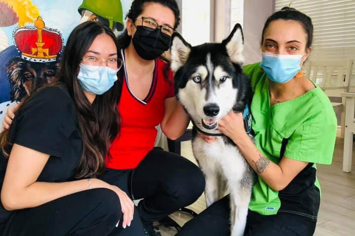 Bay Cat and Dog Hospital