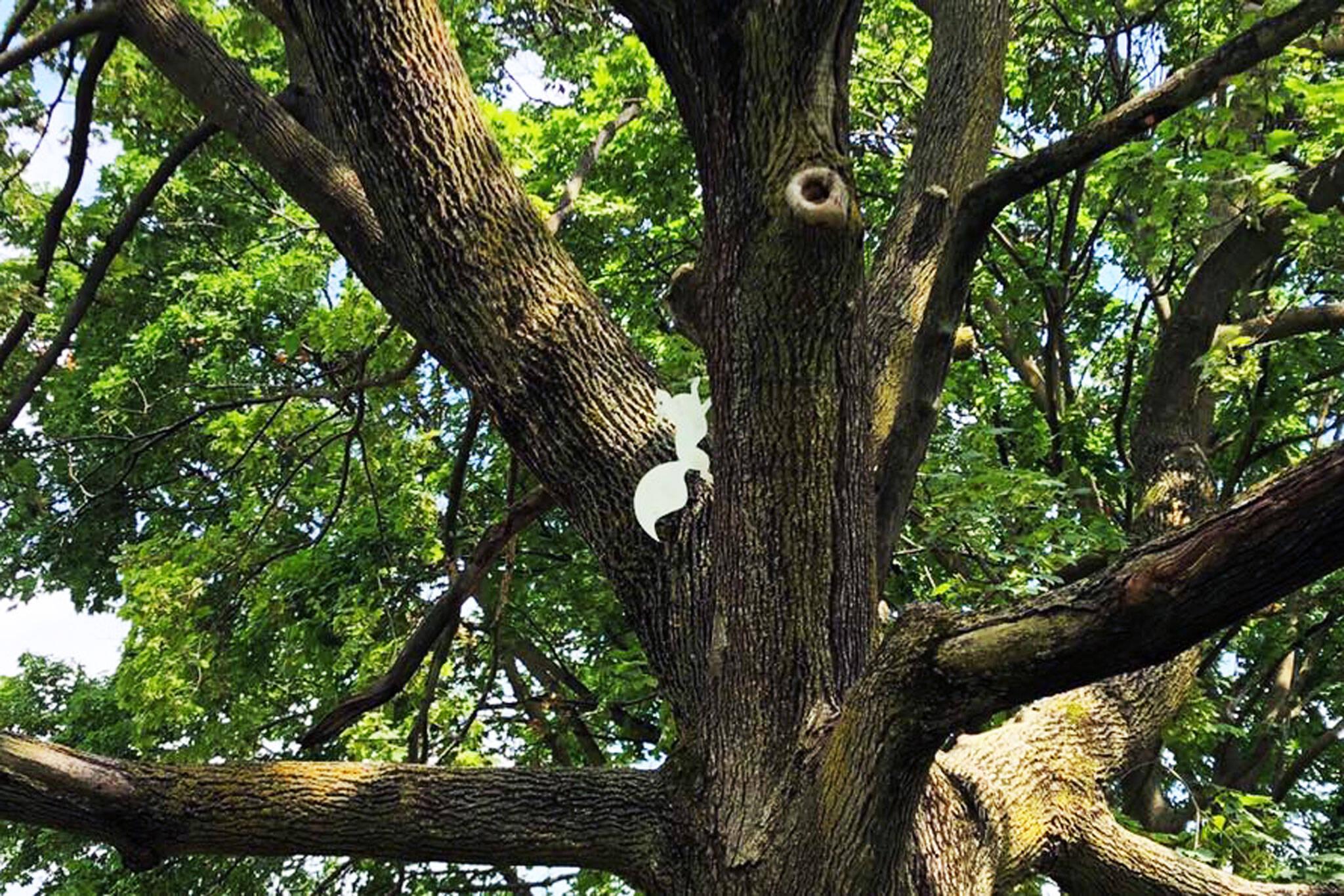 white squirrel toronto