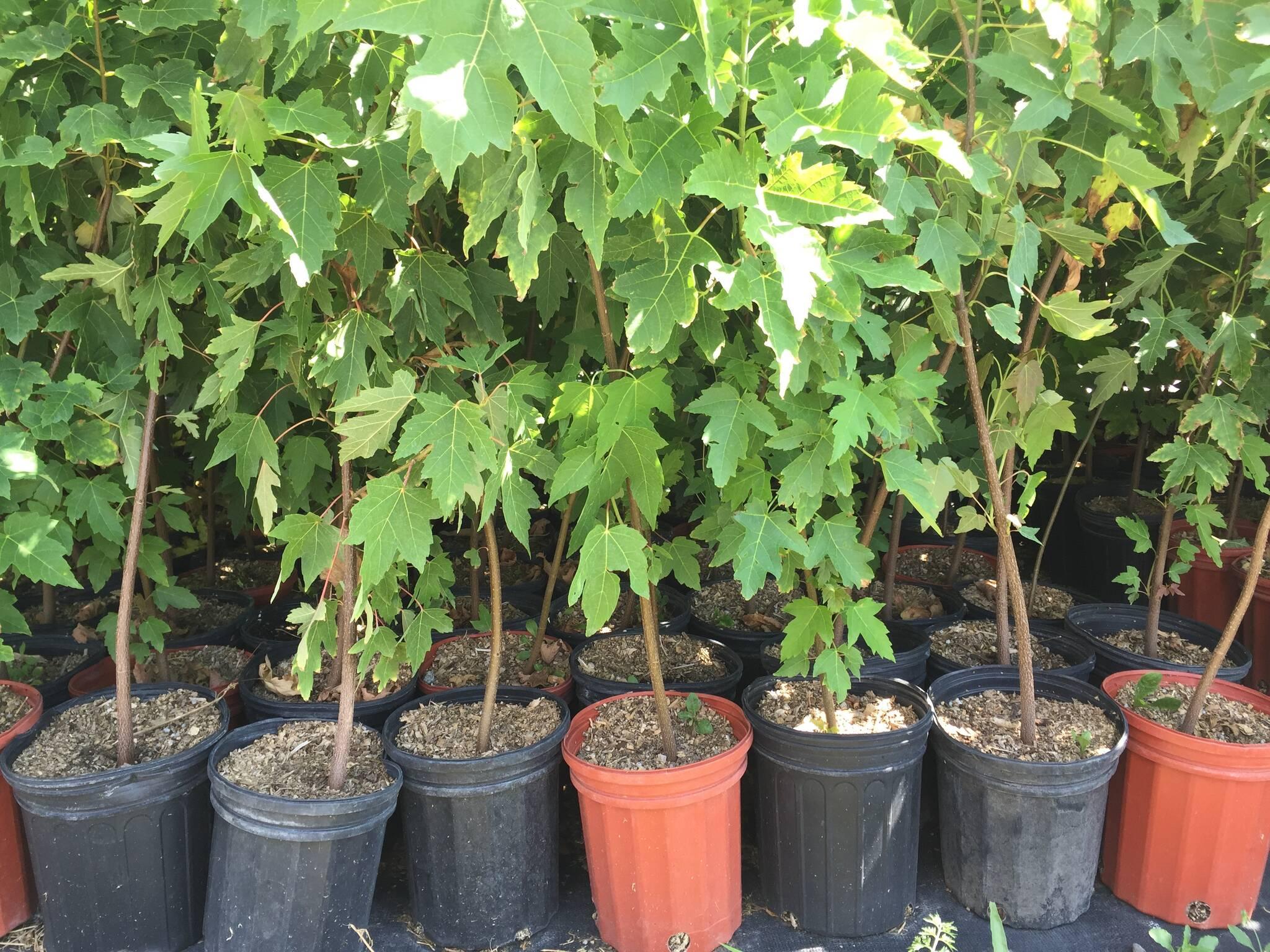 Elspeth Heyworth Centre For Women Hosts Tree Me