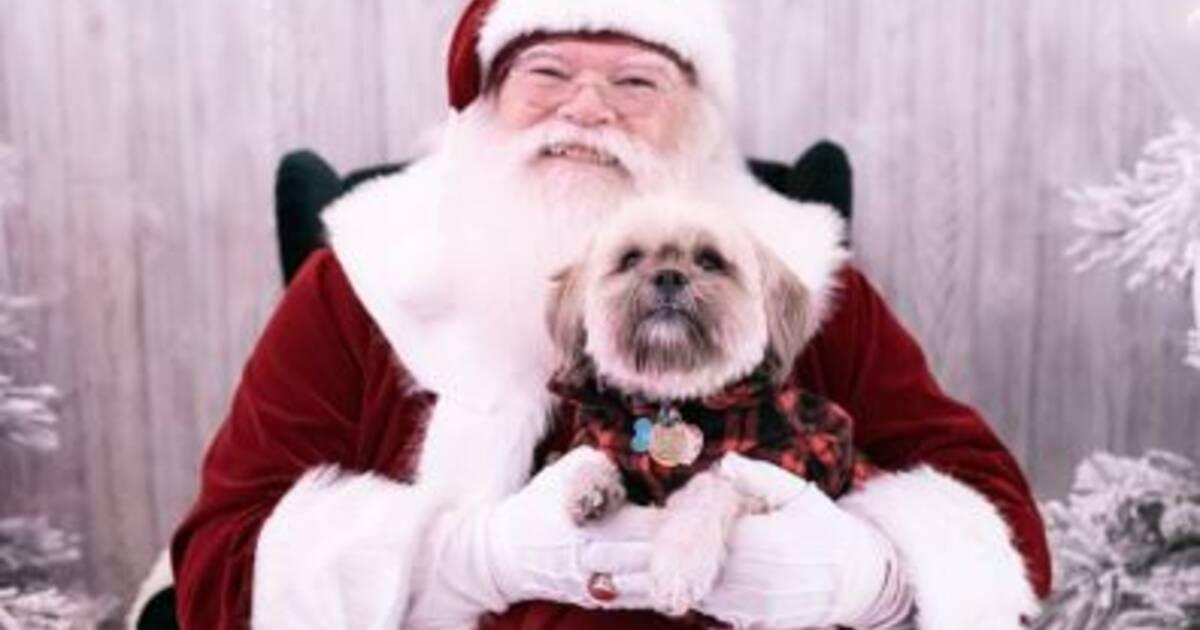 Photos with Santa at PetSmart!