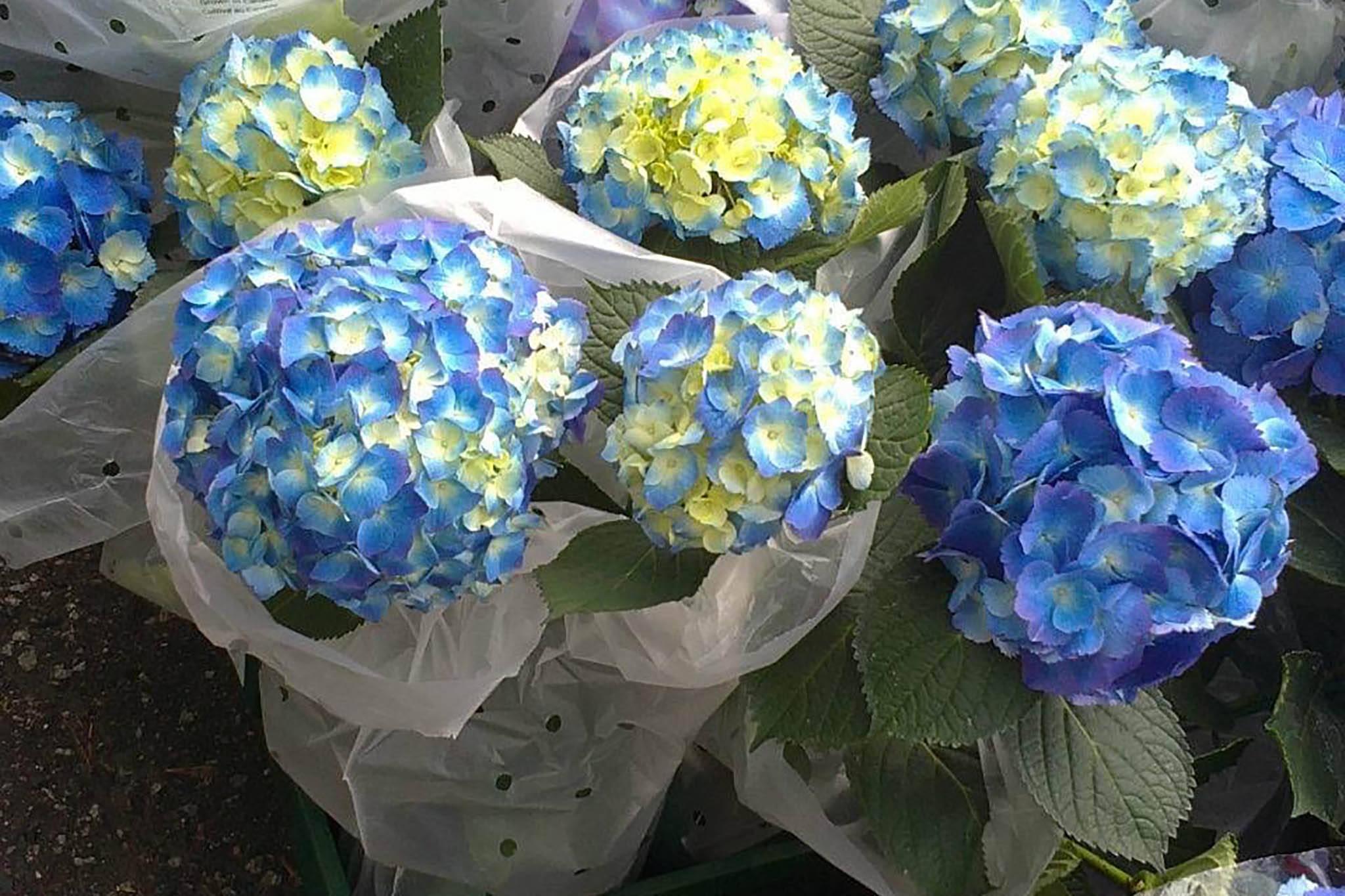 yens flower shop toronto