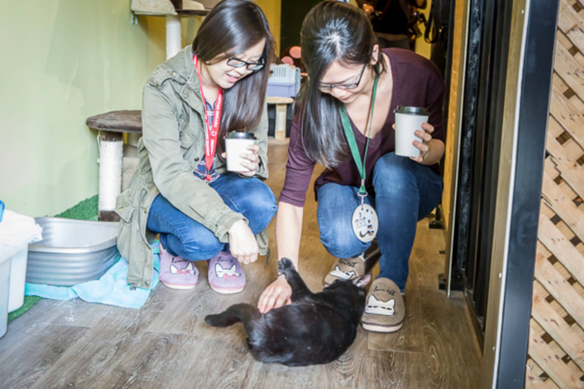 Toronto Cat Cafe Closed
