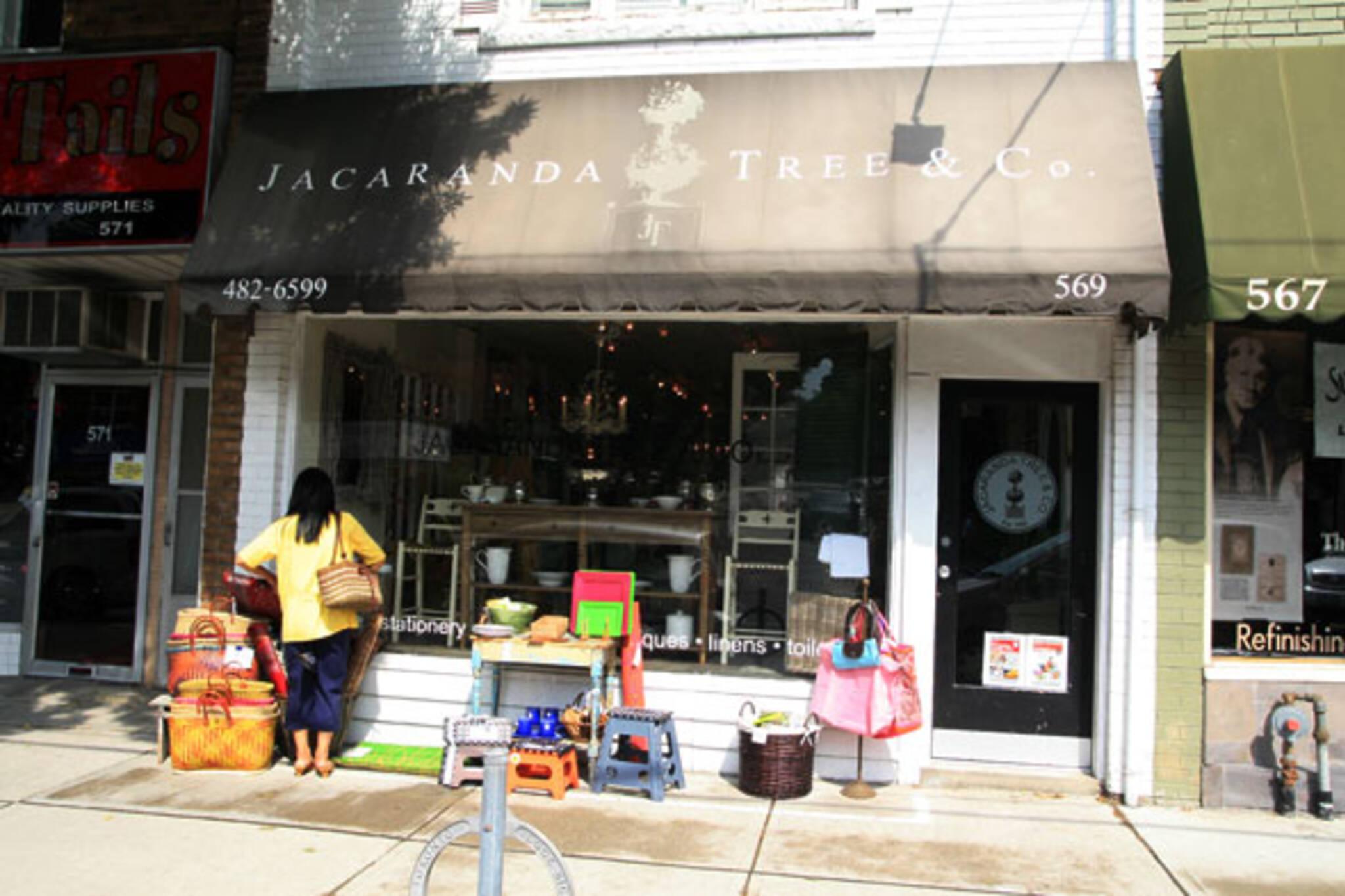 Jacaranda Tree Toronto