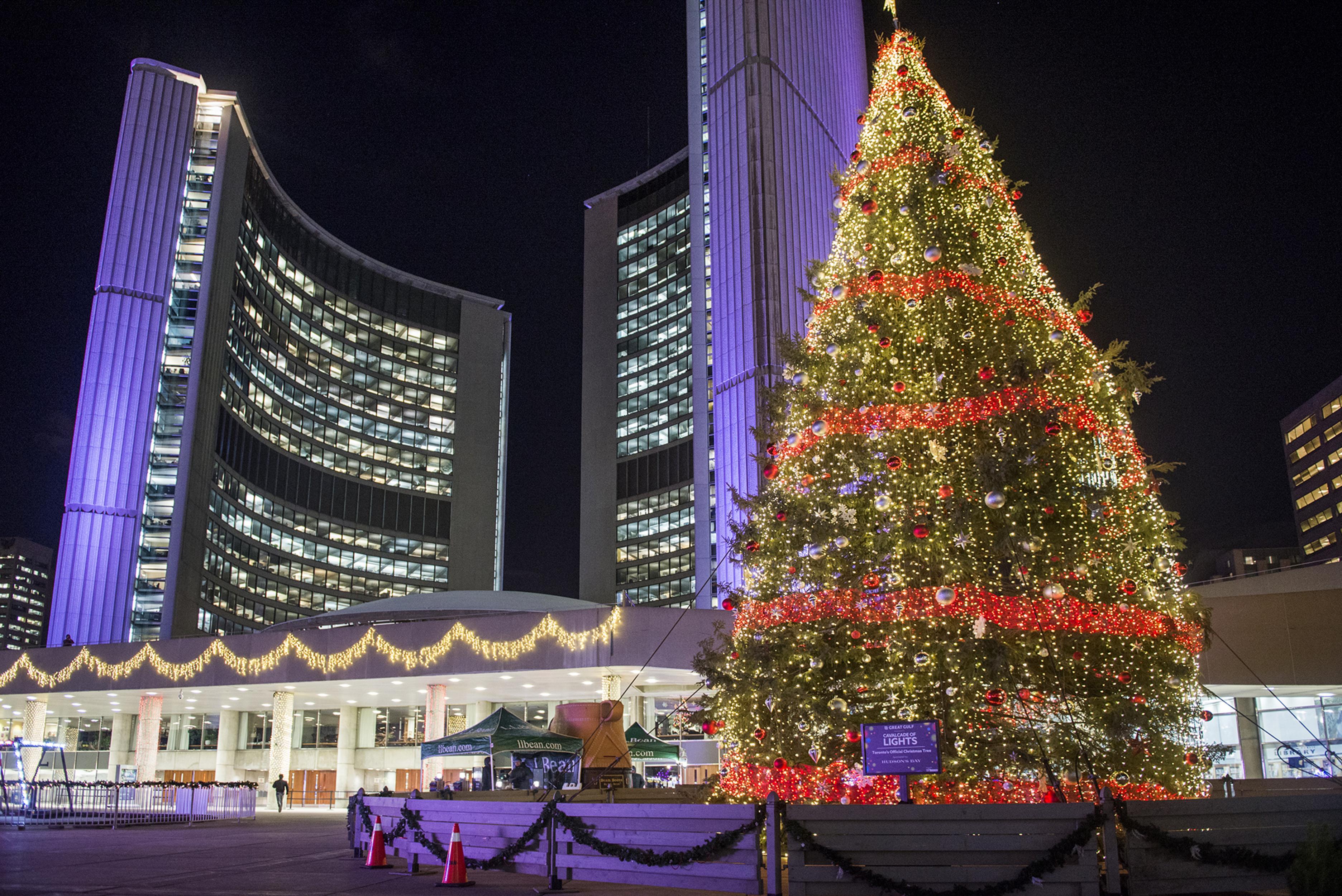 Christmas Pig Lights