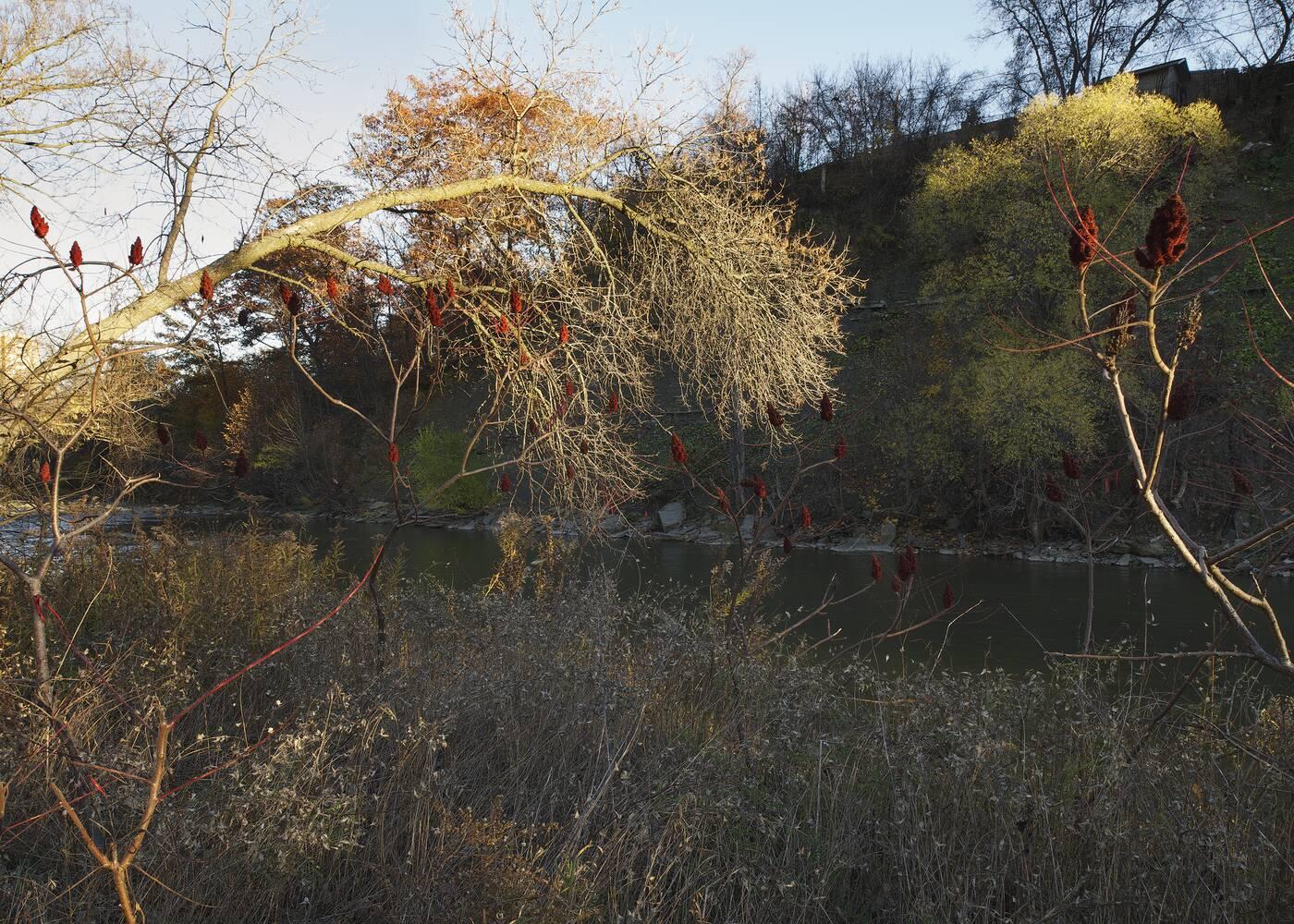 robert burley toronto parkland