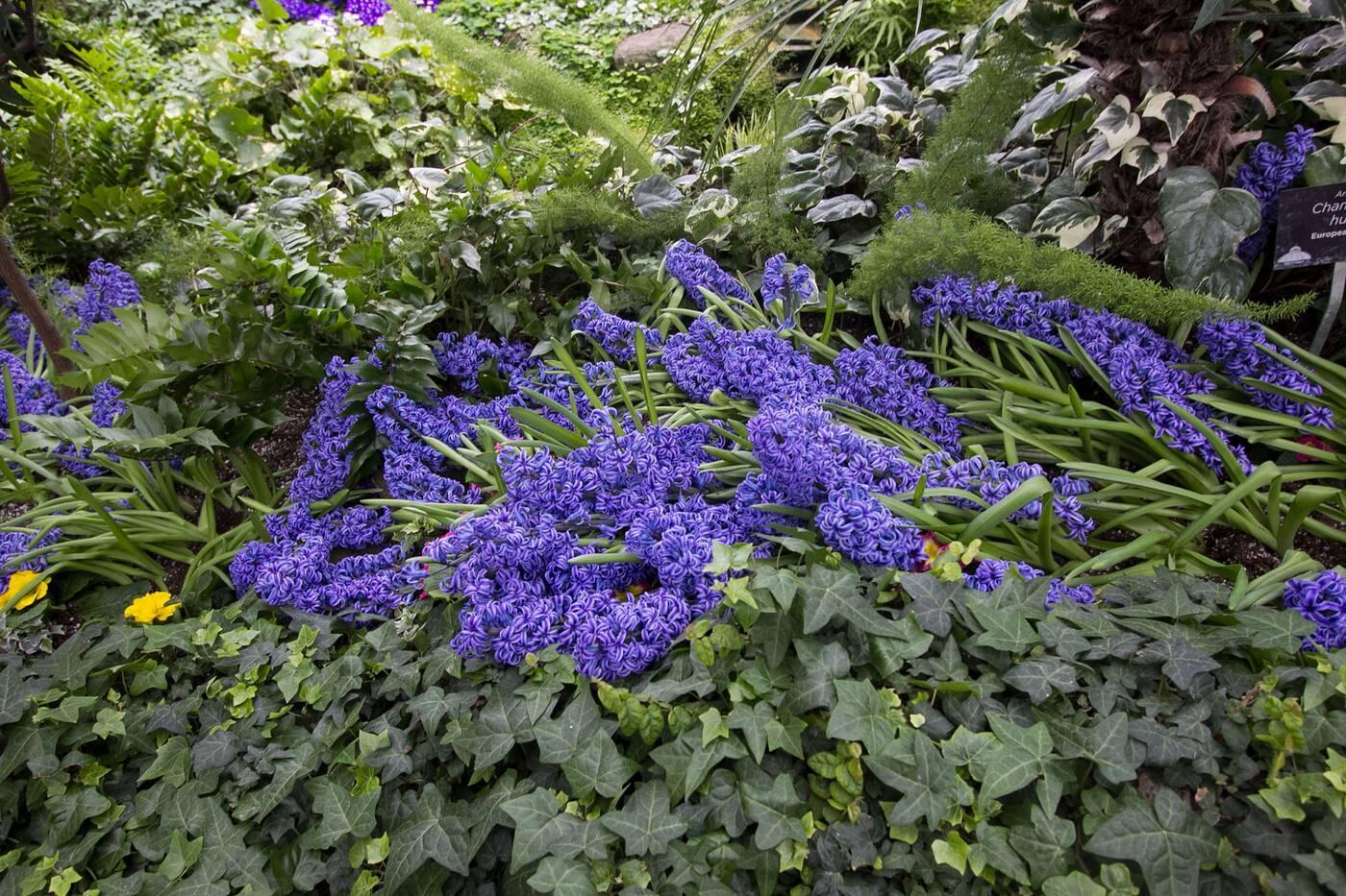 allan gardens toronto
