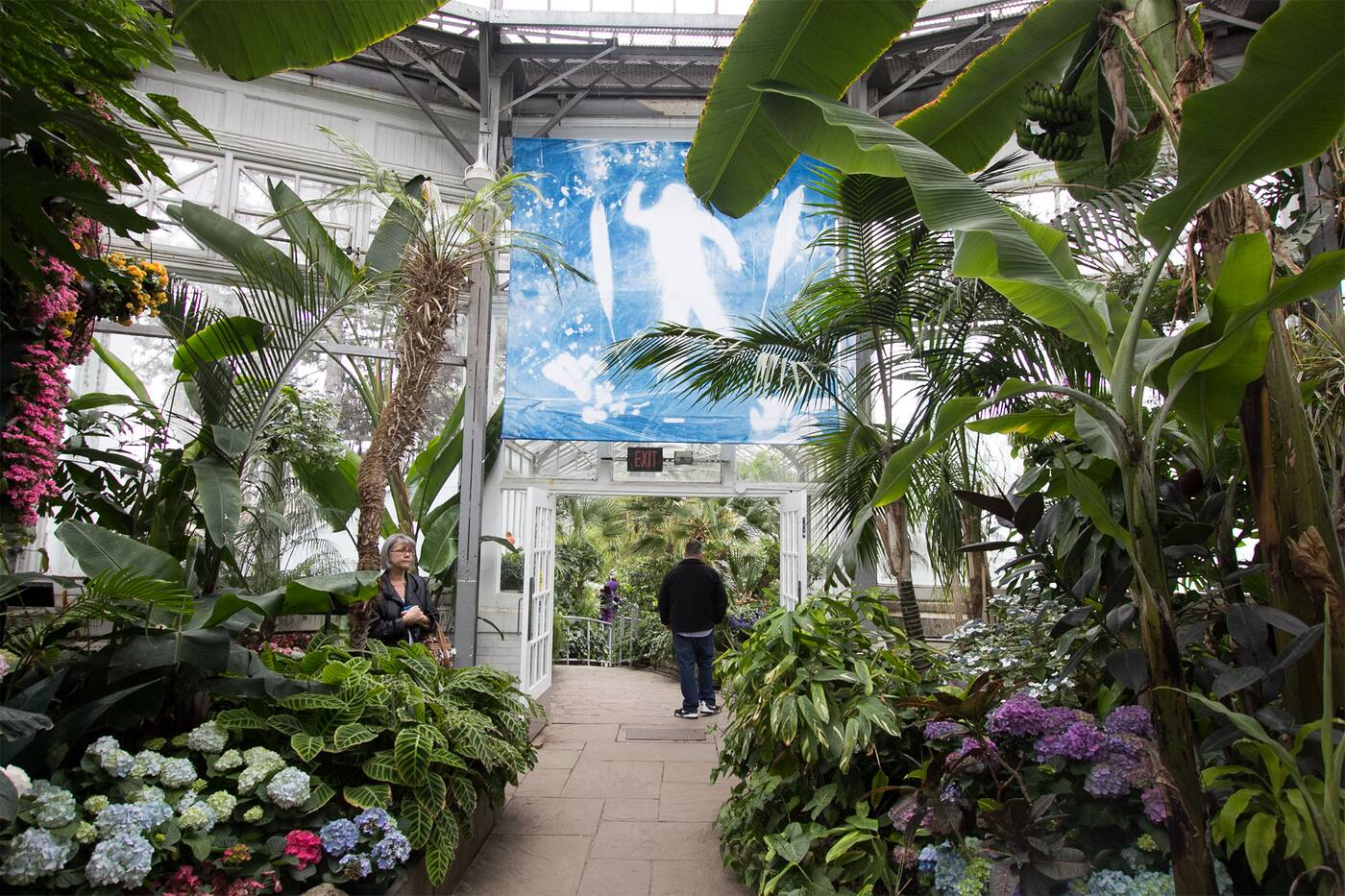 Image result for allan gardens conservatory