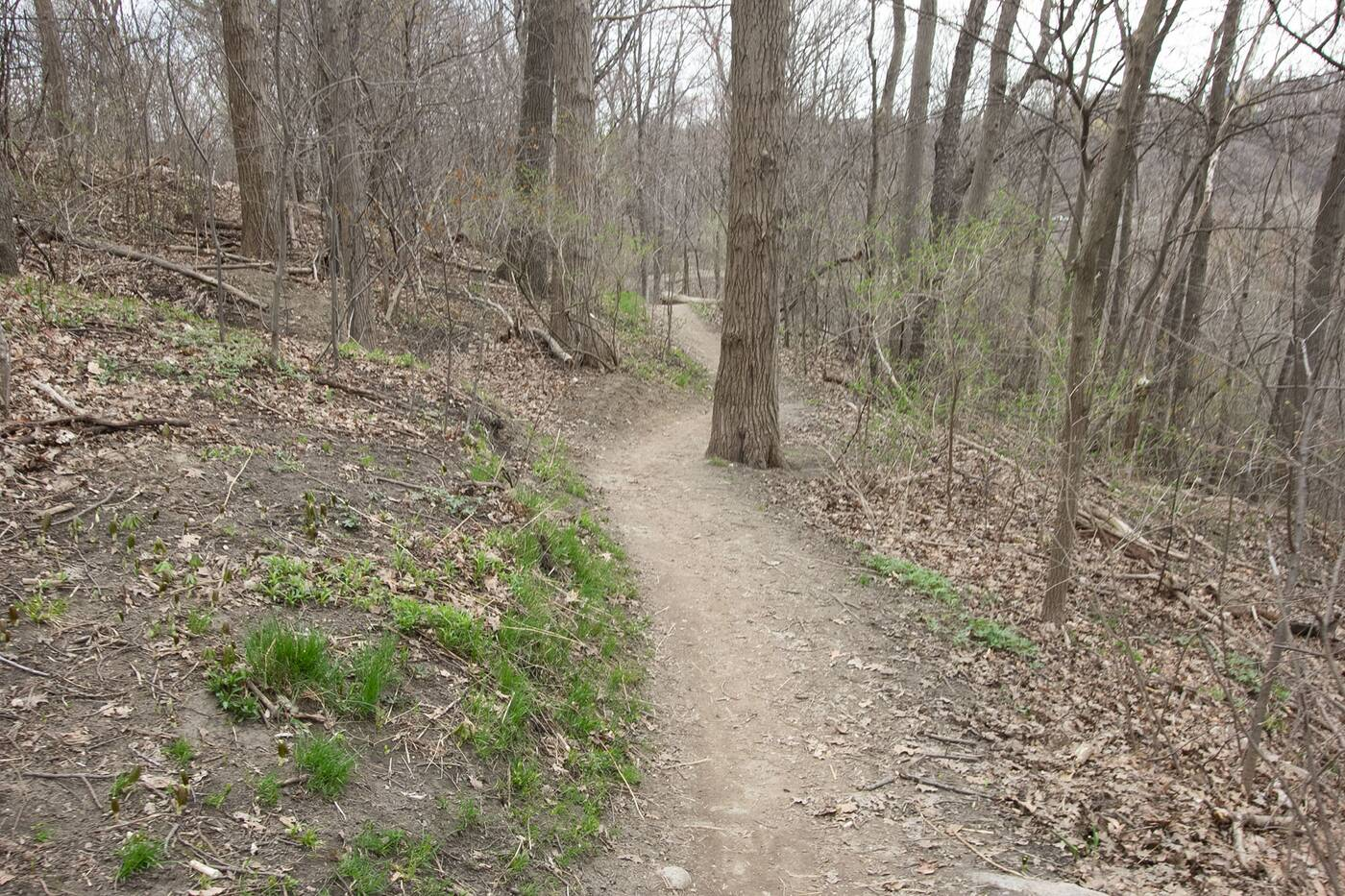 crothers woods toronto