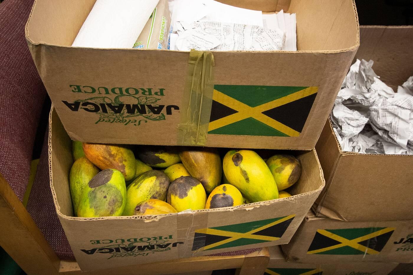 little jamaica toronto