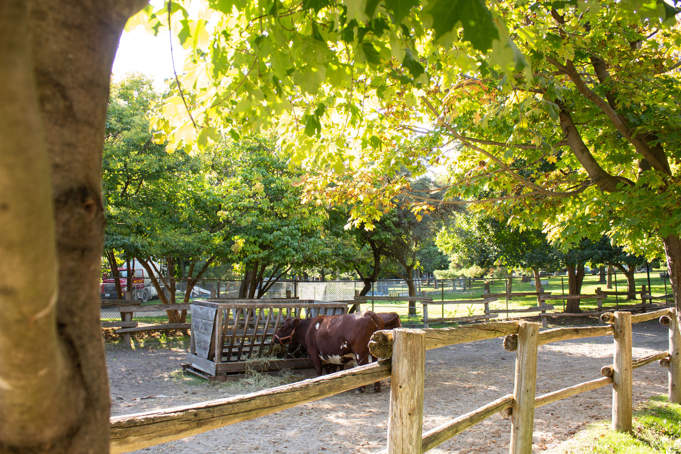 riverdale farm toronto
