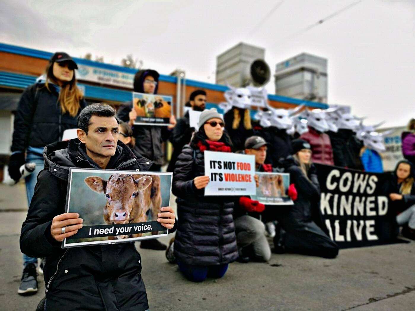animal rights toronto