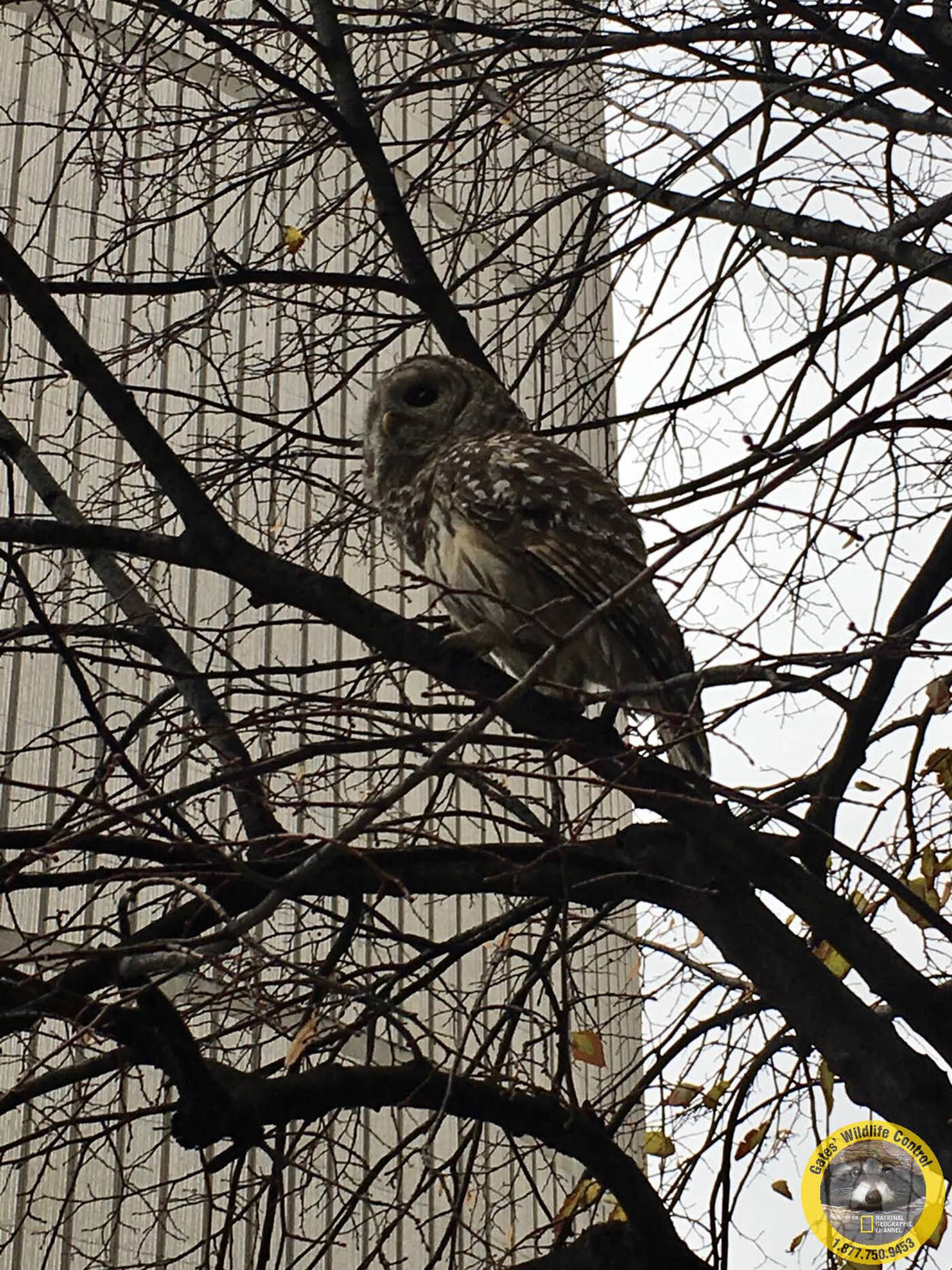 eaton centre owl