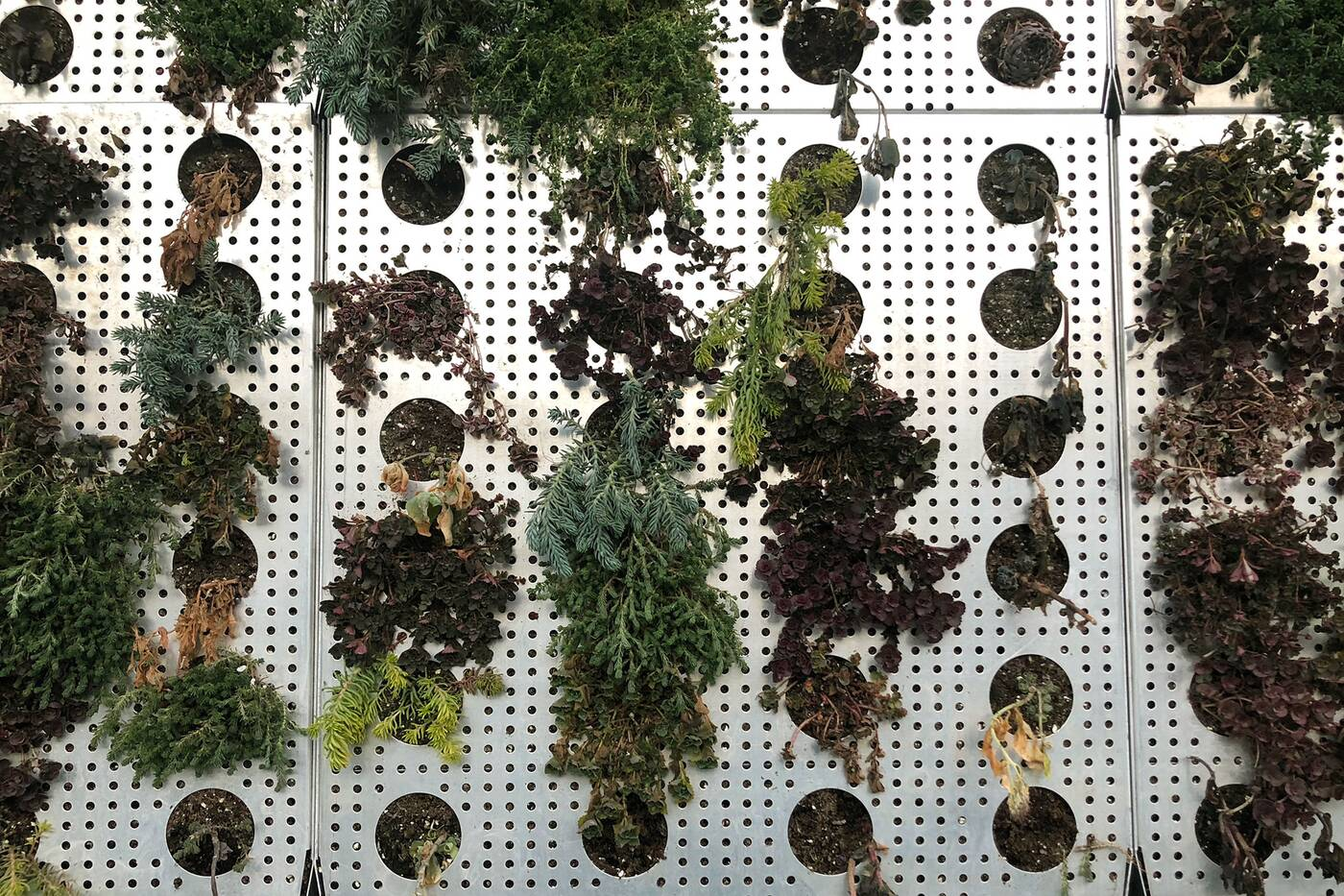 vertical garden toronto