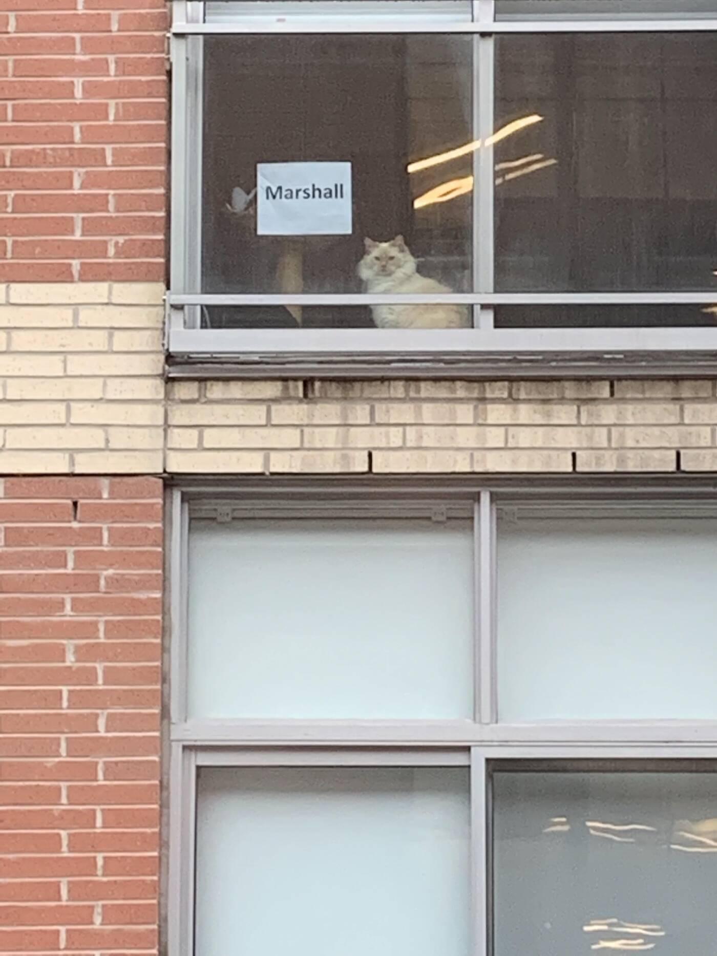 marshall cat toronto