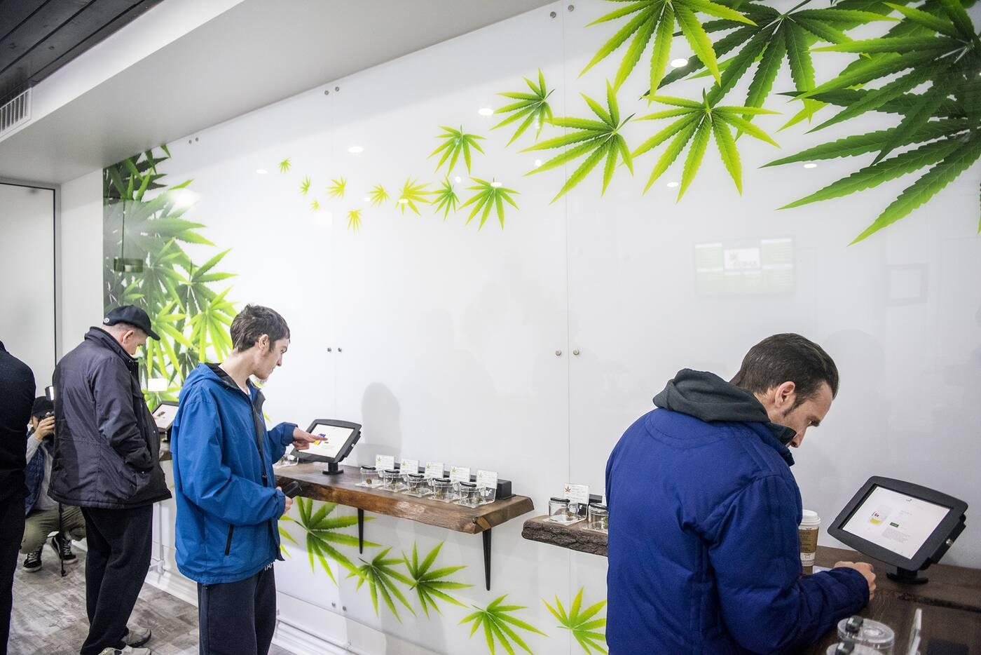 ameri cannabis toronto