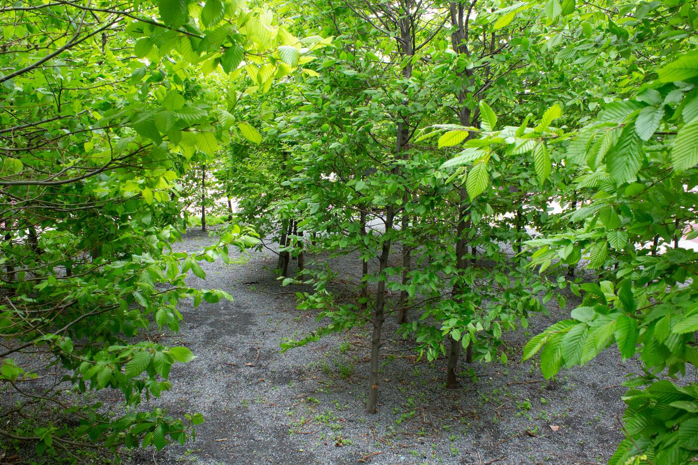 june callwood park toronto