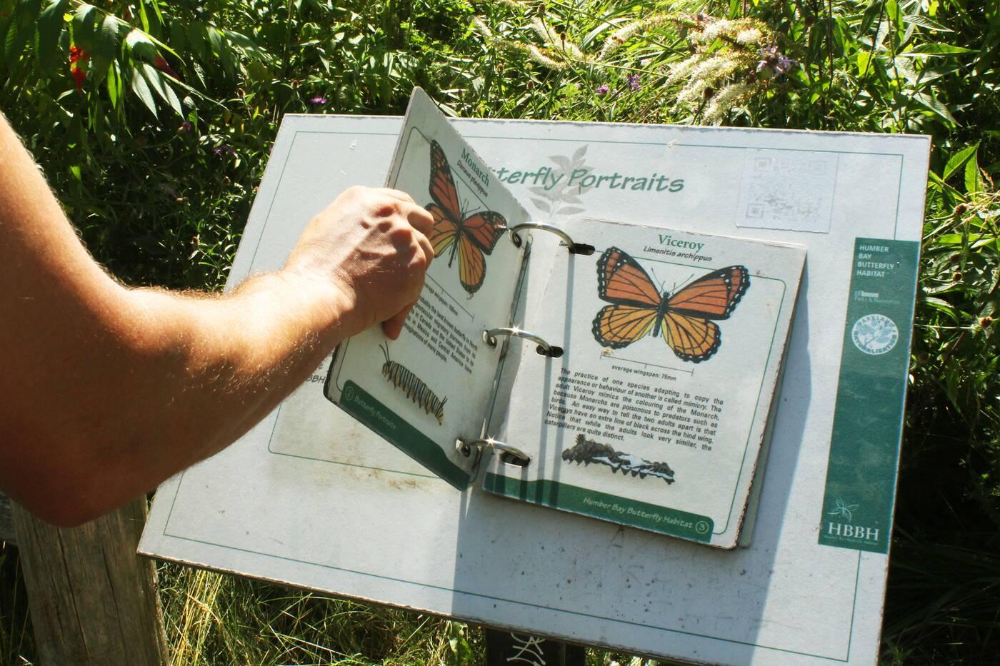 butterfly conservatory toronto