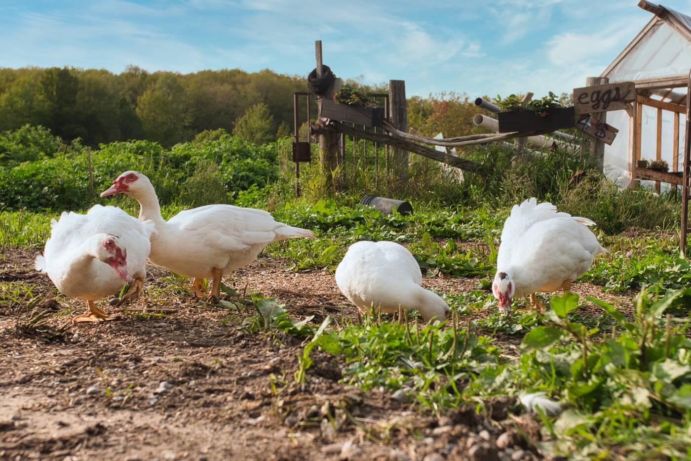 Chanterelle Farm