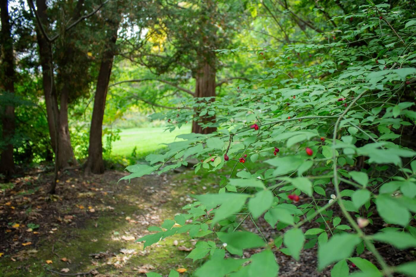 james garden toronto