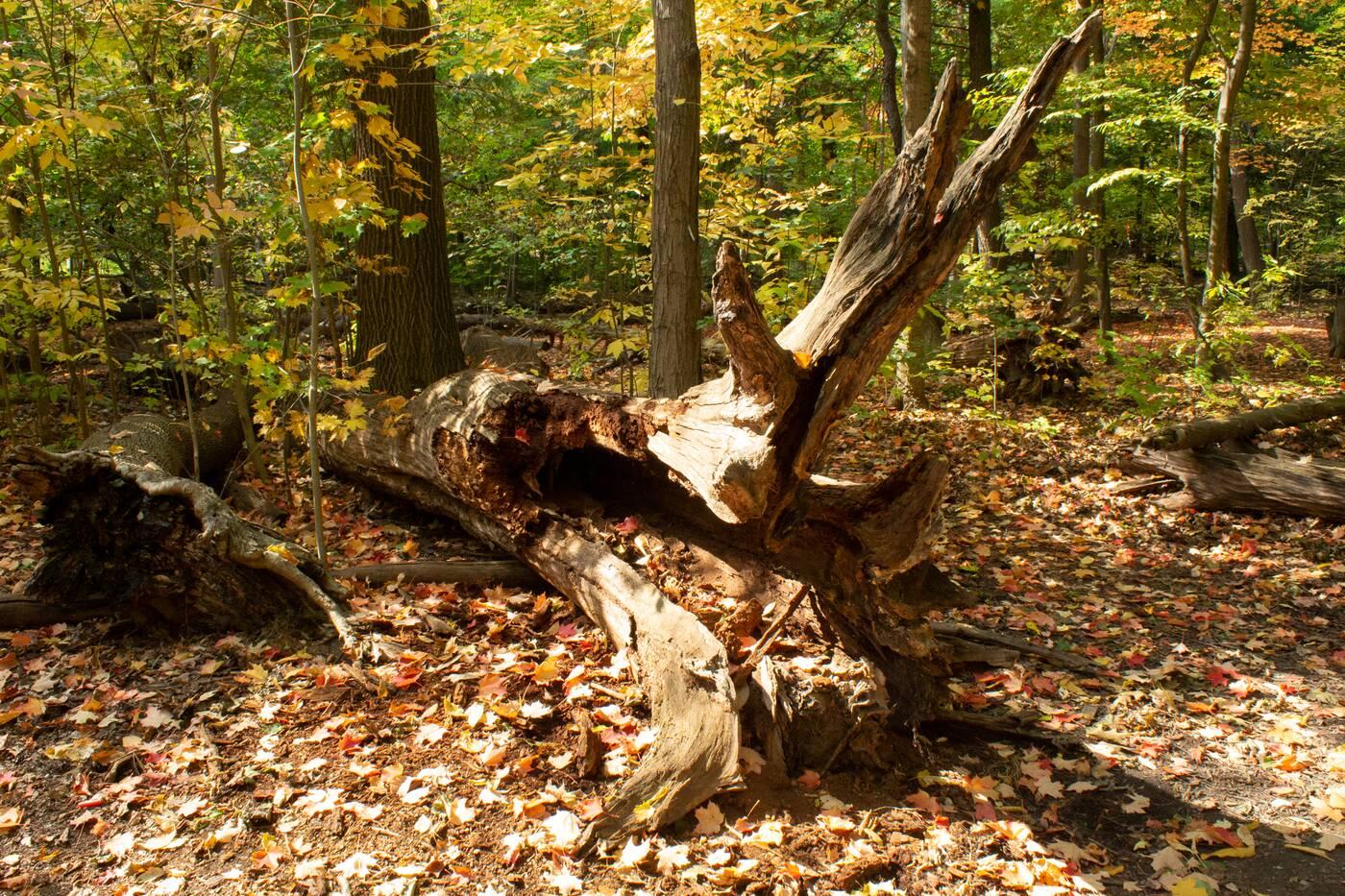 lambton woods toronto