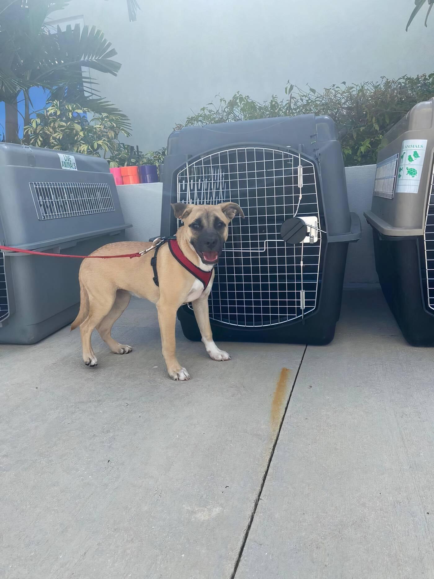 dog rescue ontario