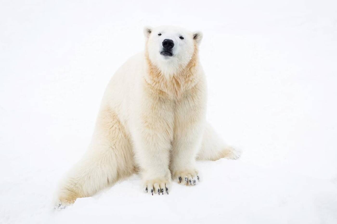 polar bear habitat
