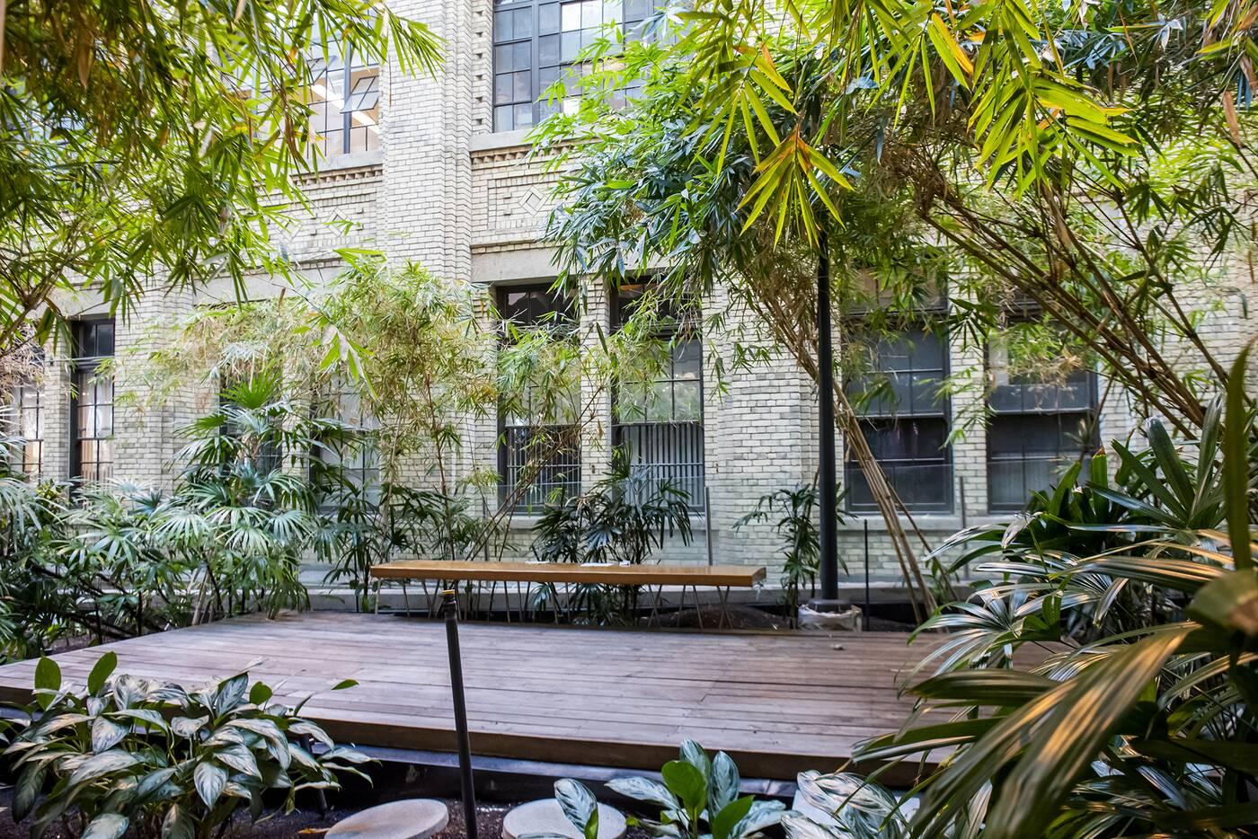 UofT bamboo garden
