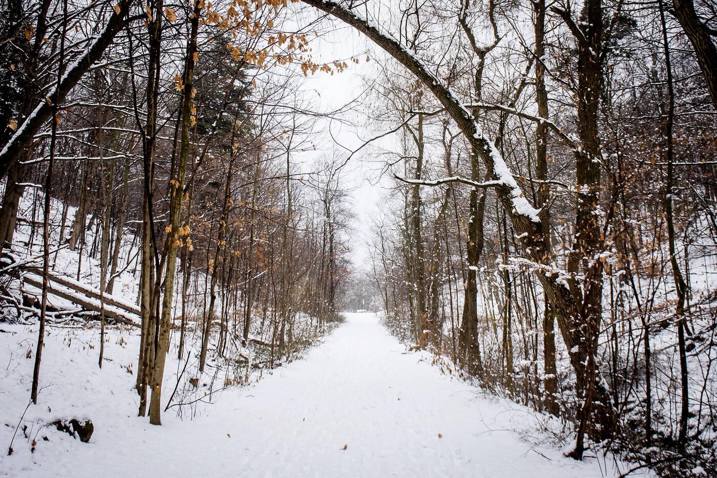 doris mccarthy trail