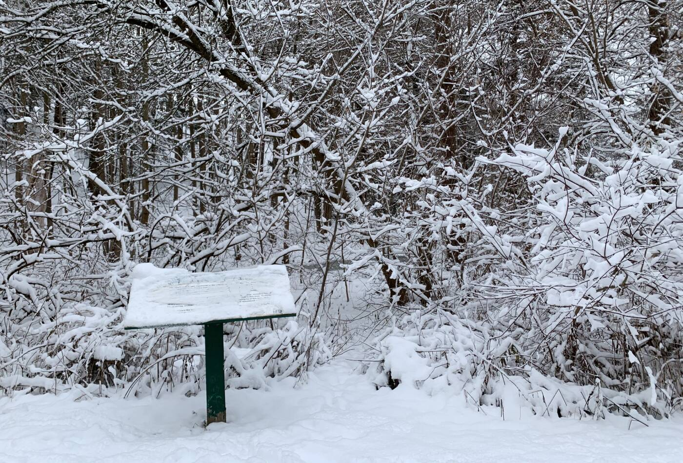 glendon forest toronto