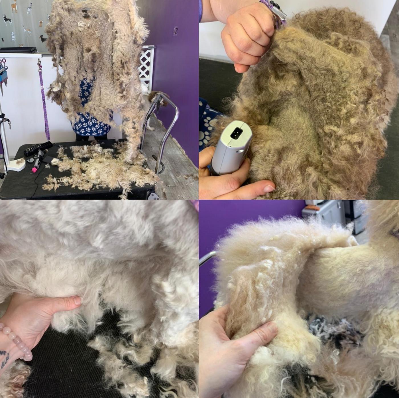 dog grooming toronto