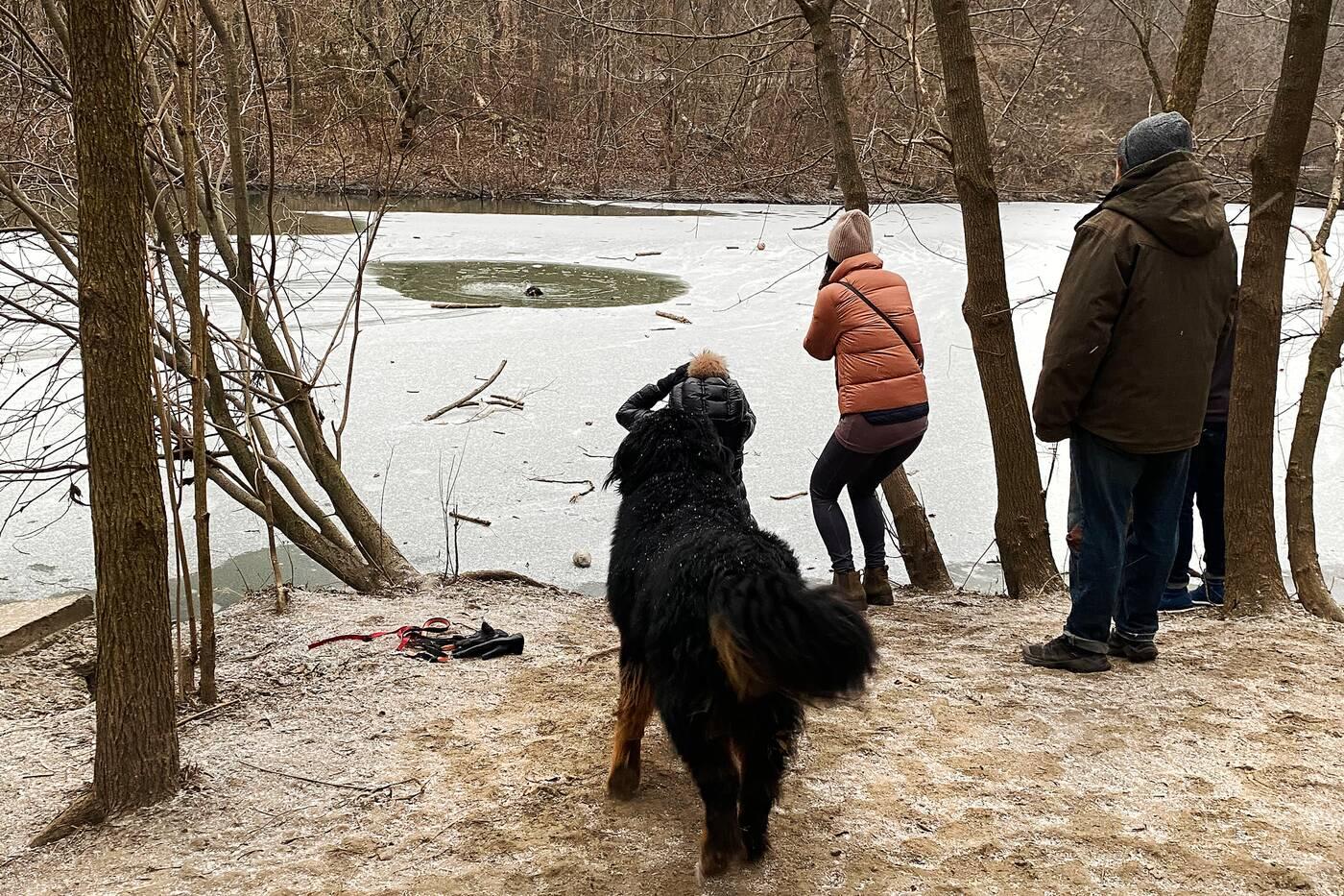 high park dog rescue
